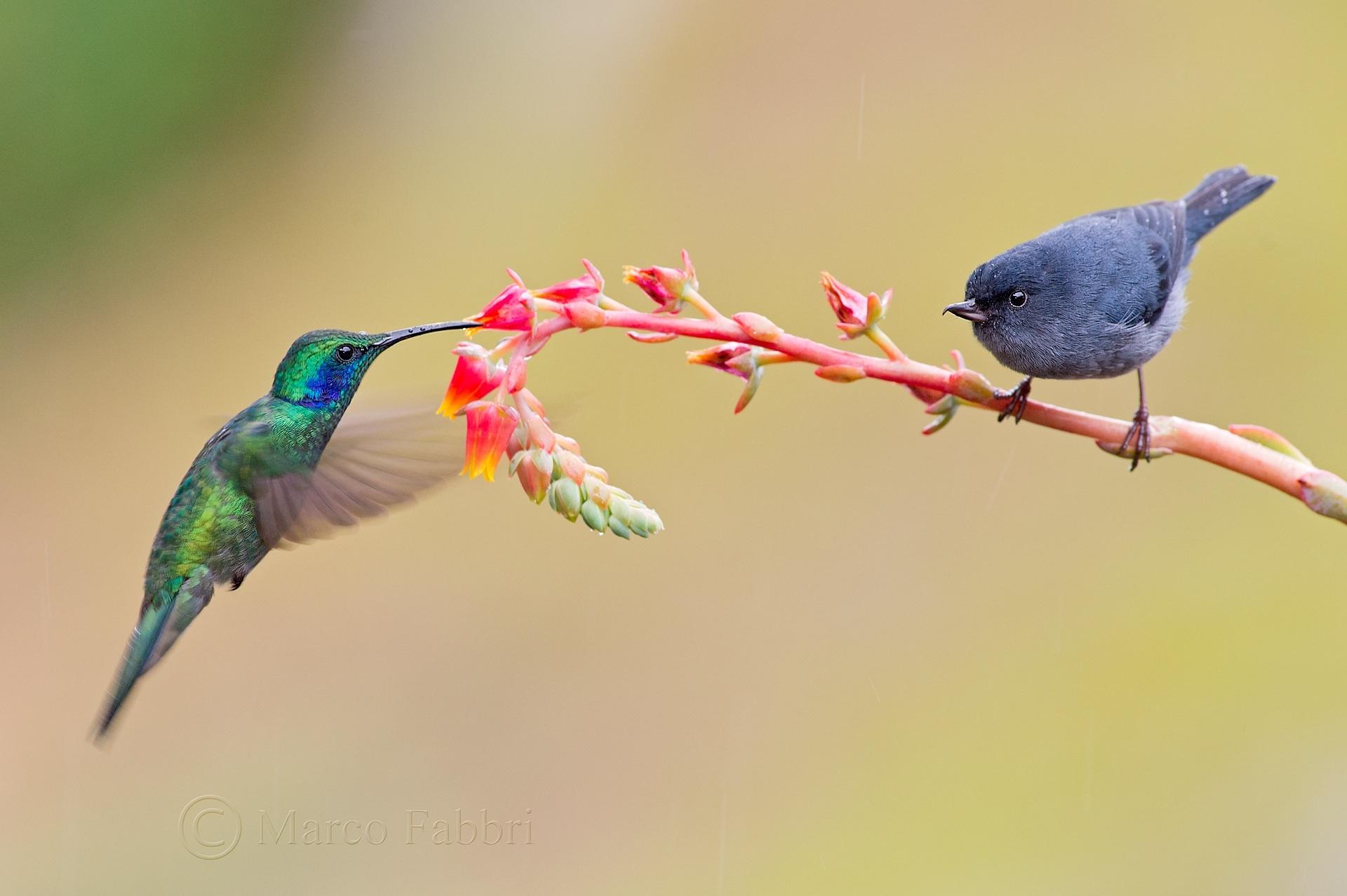 Un fiore per due...