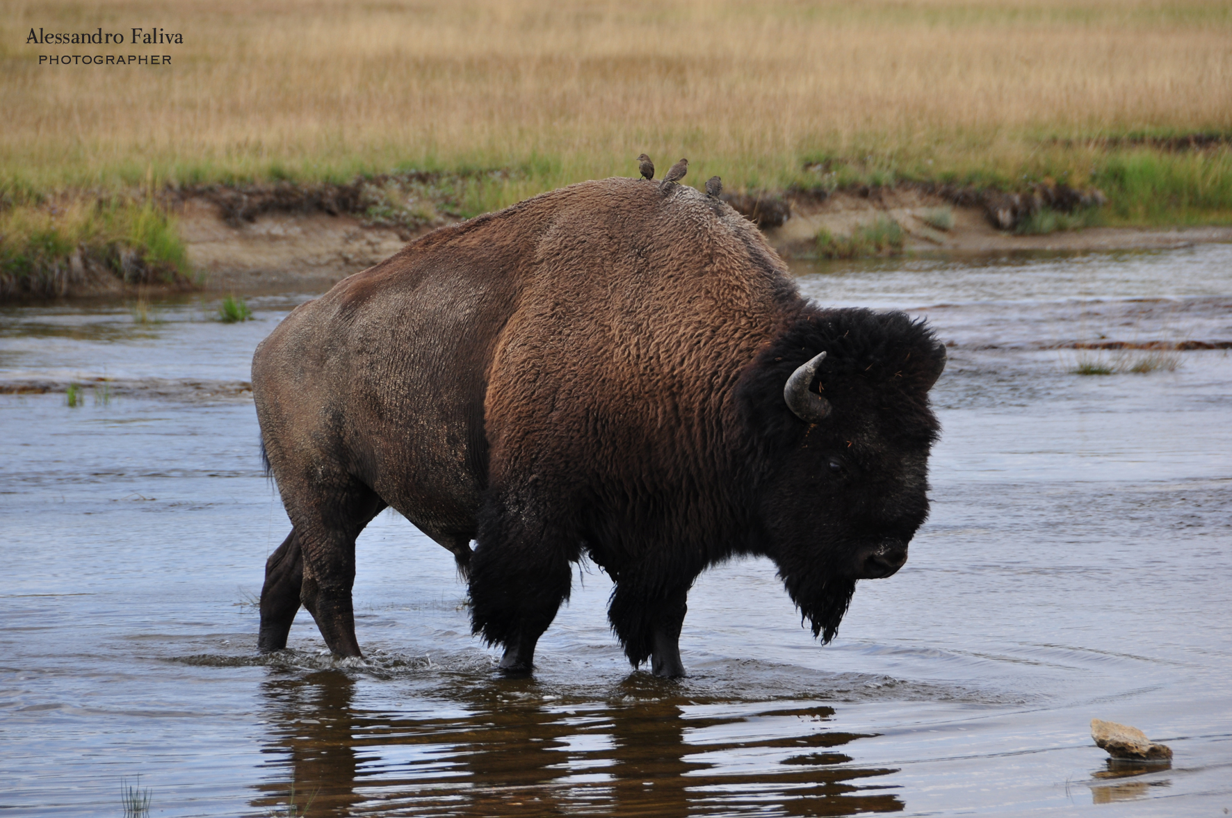 Yellowstone...
