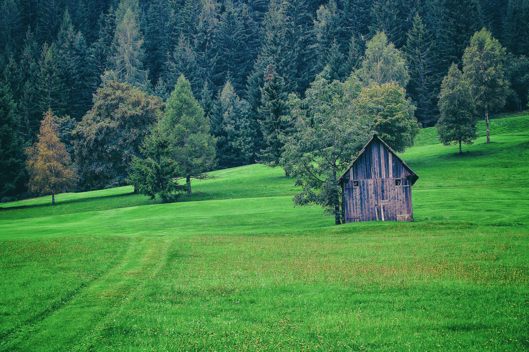 verde d'Austria...