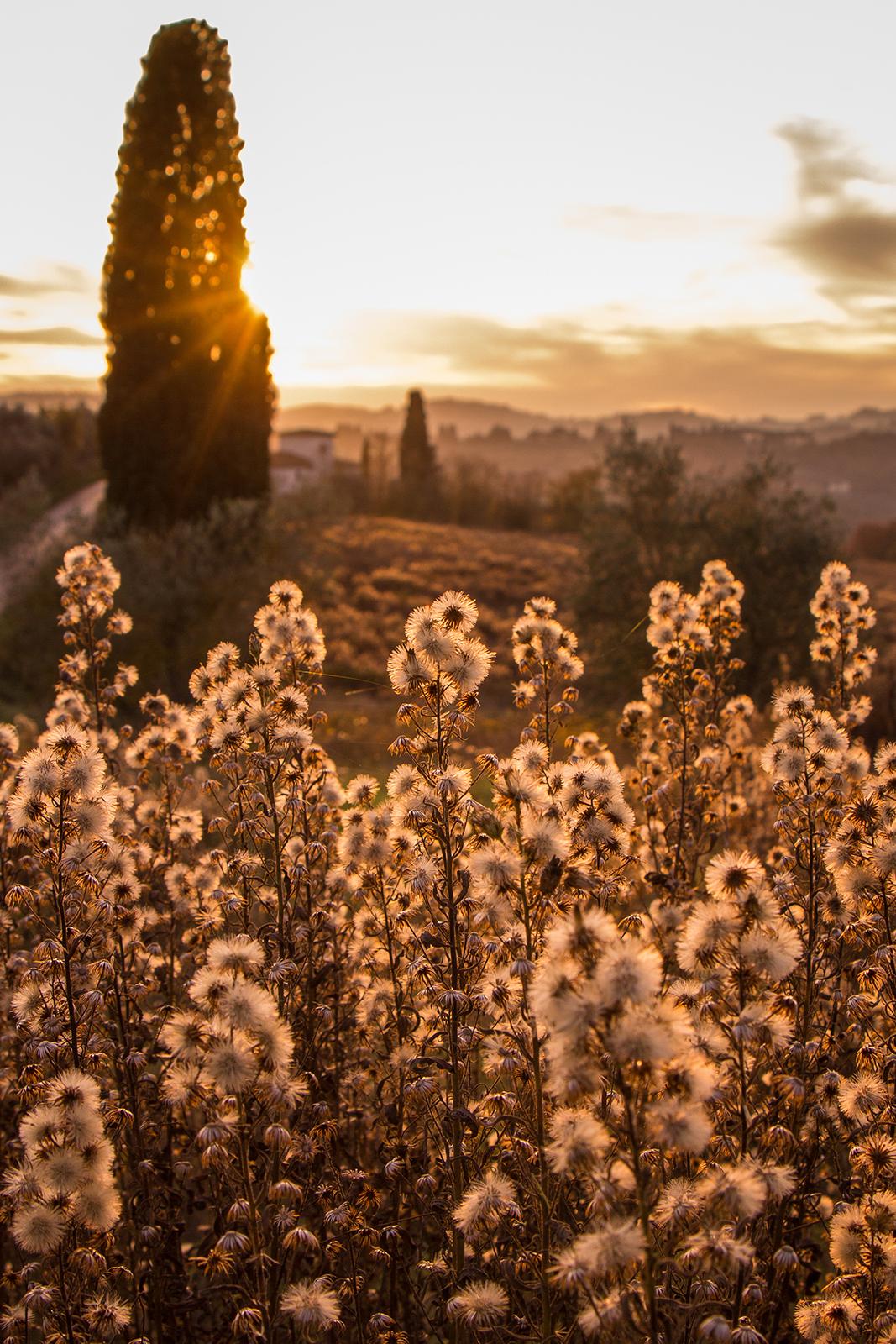 Tuscan Sunset...