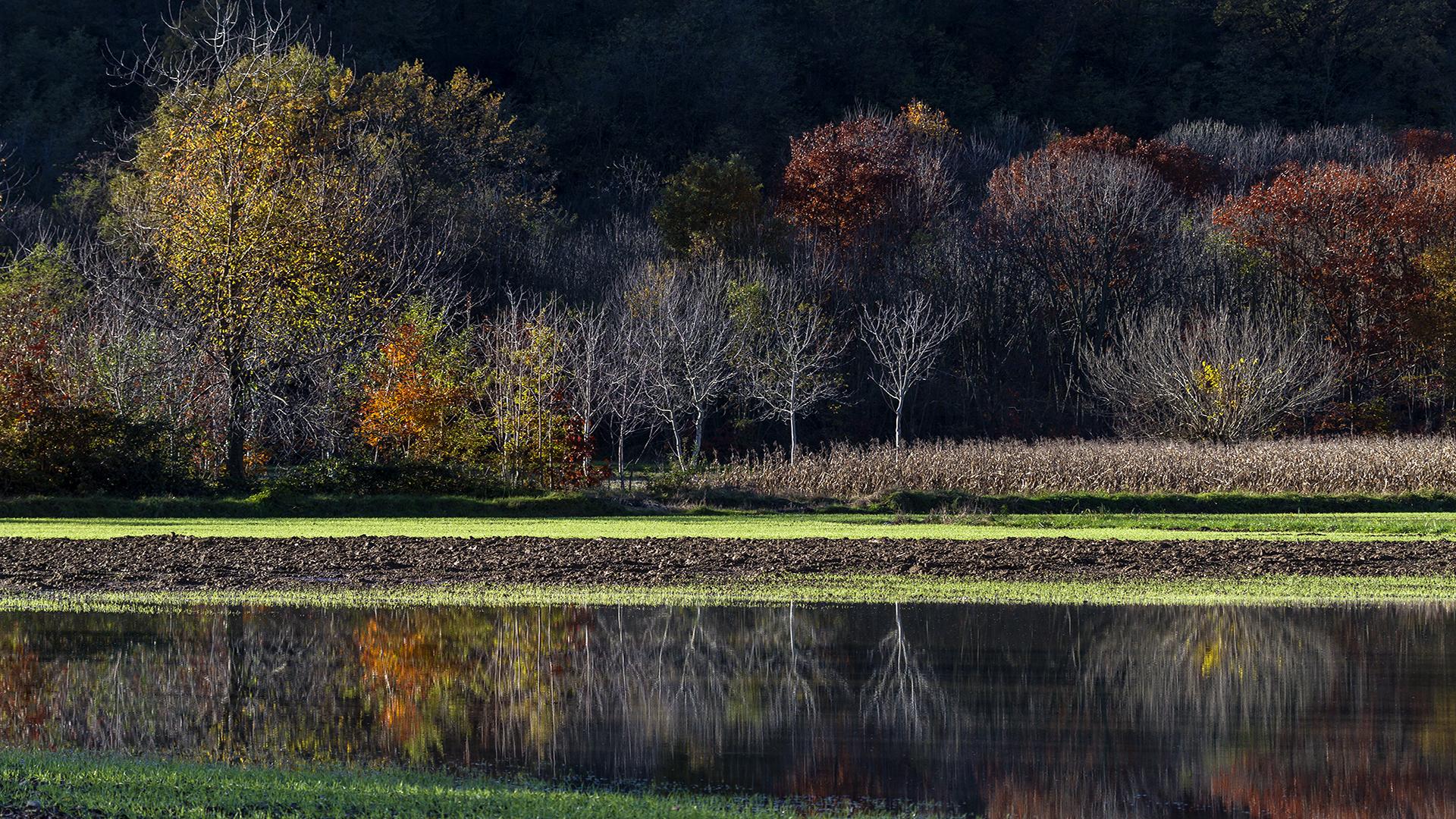 Last fall colors .........