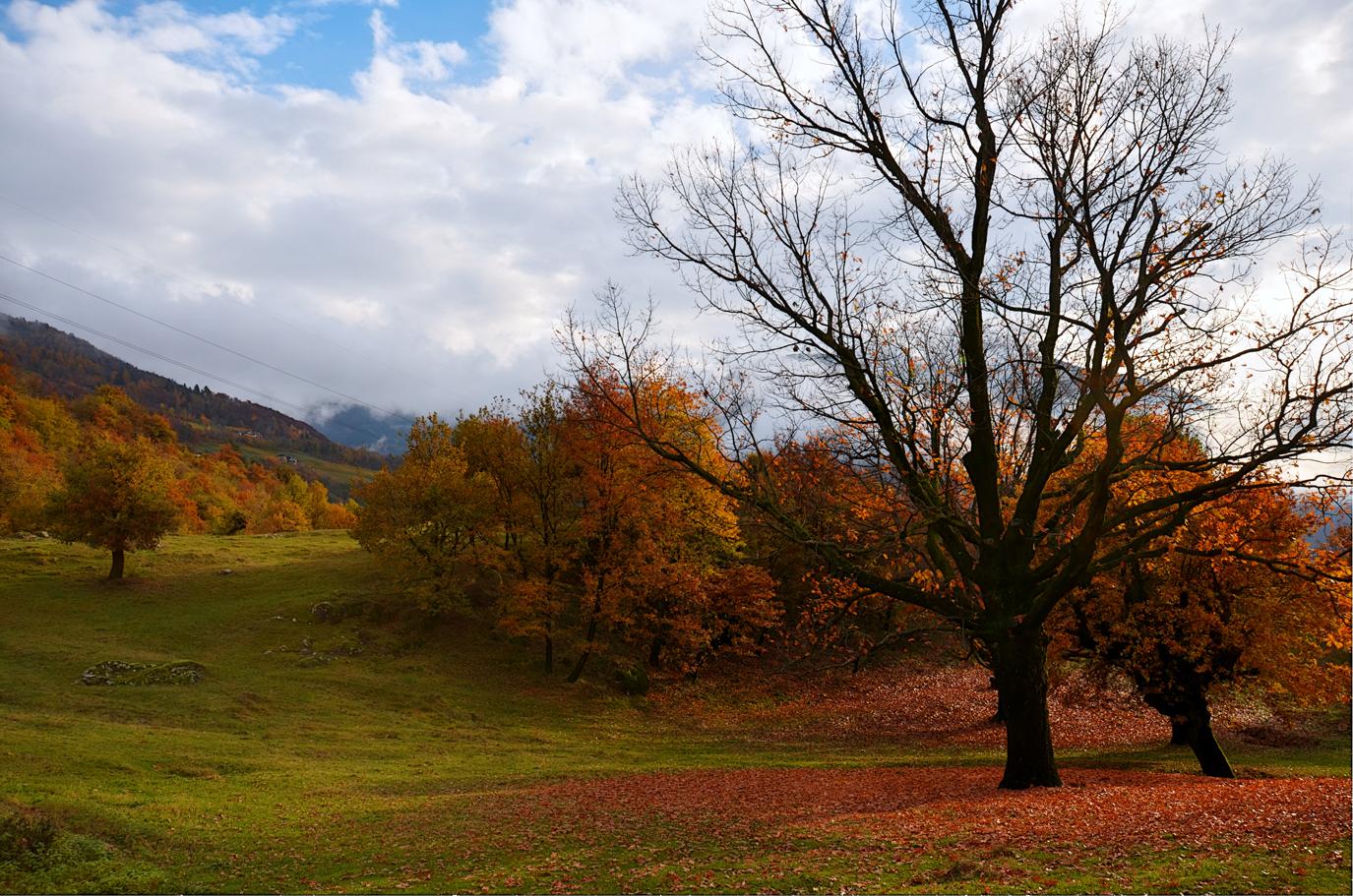 autumn and its colori_2...