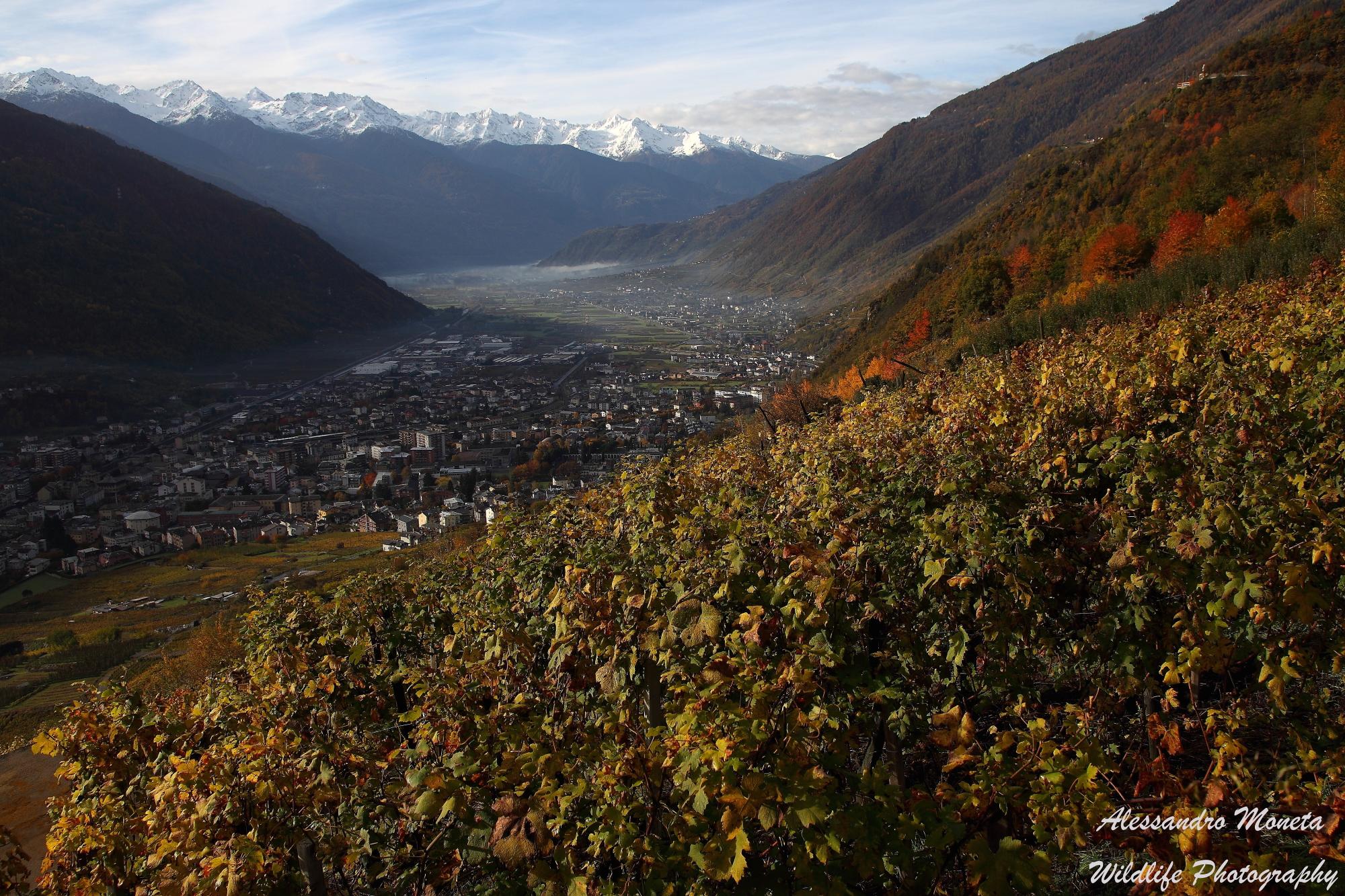 Valtellina...