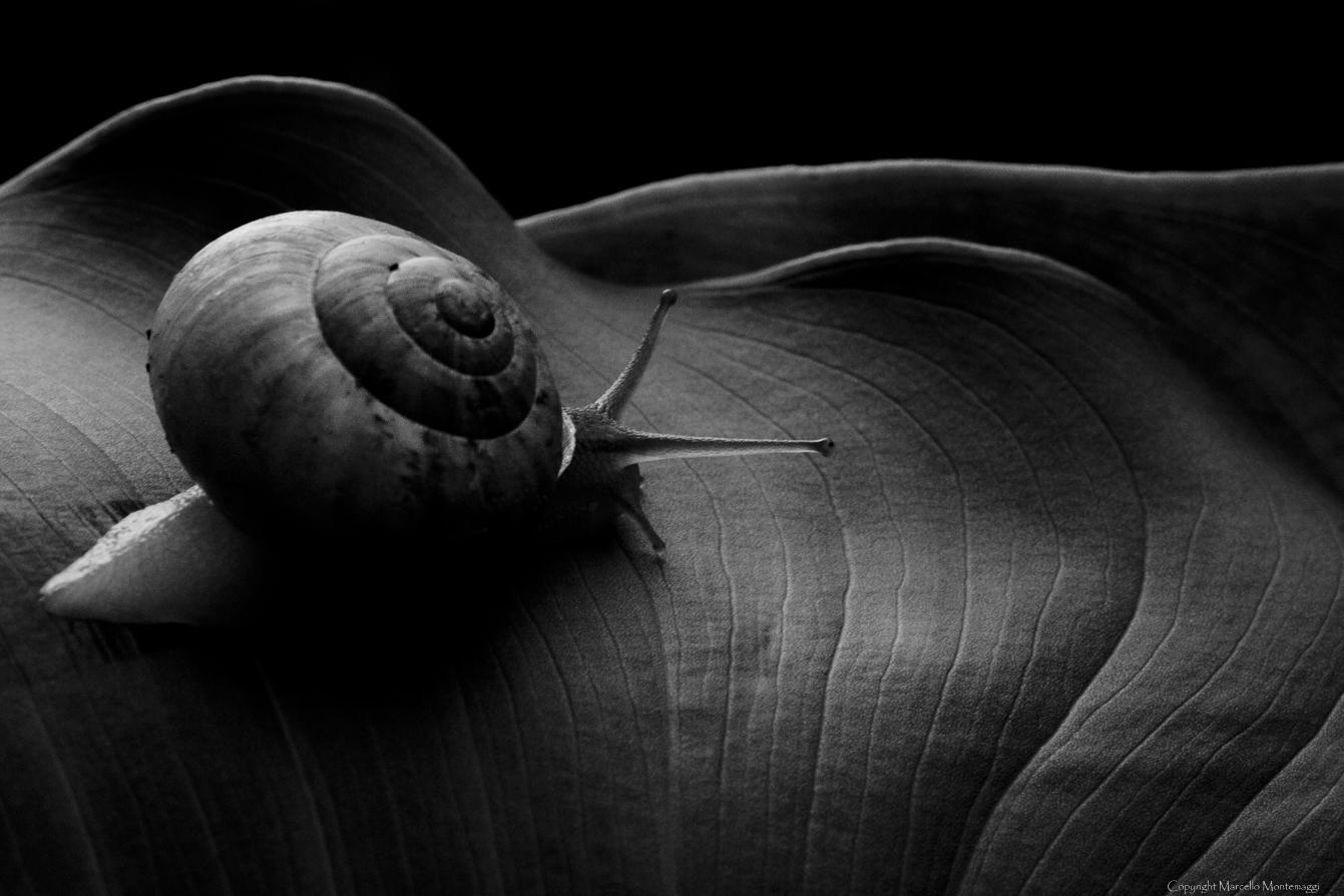 Snail in B & N...