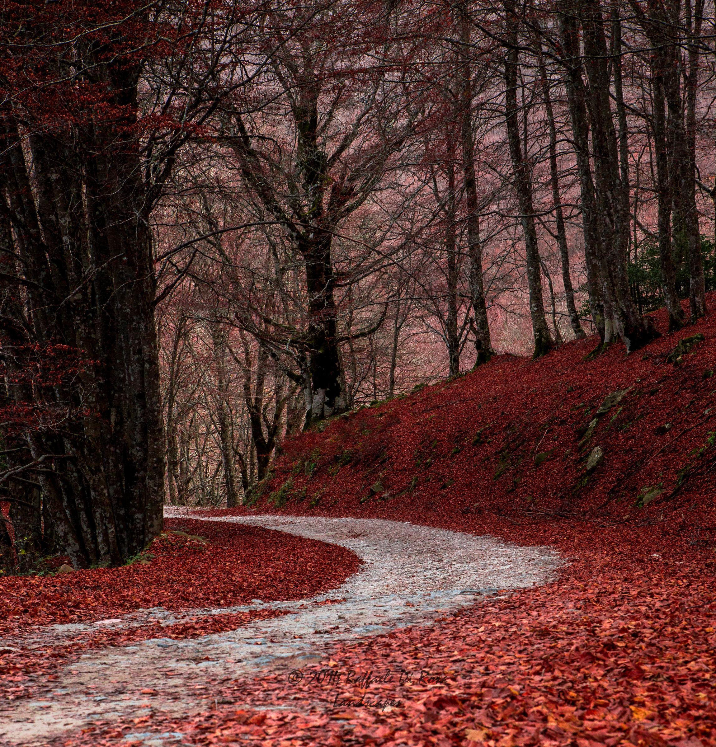 Il sentiero verso il bosco...