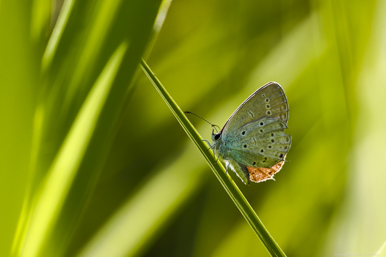 butterfly and green 2...