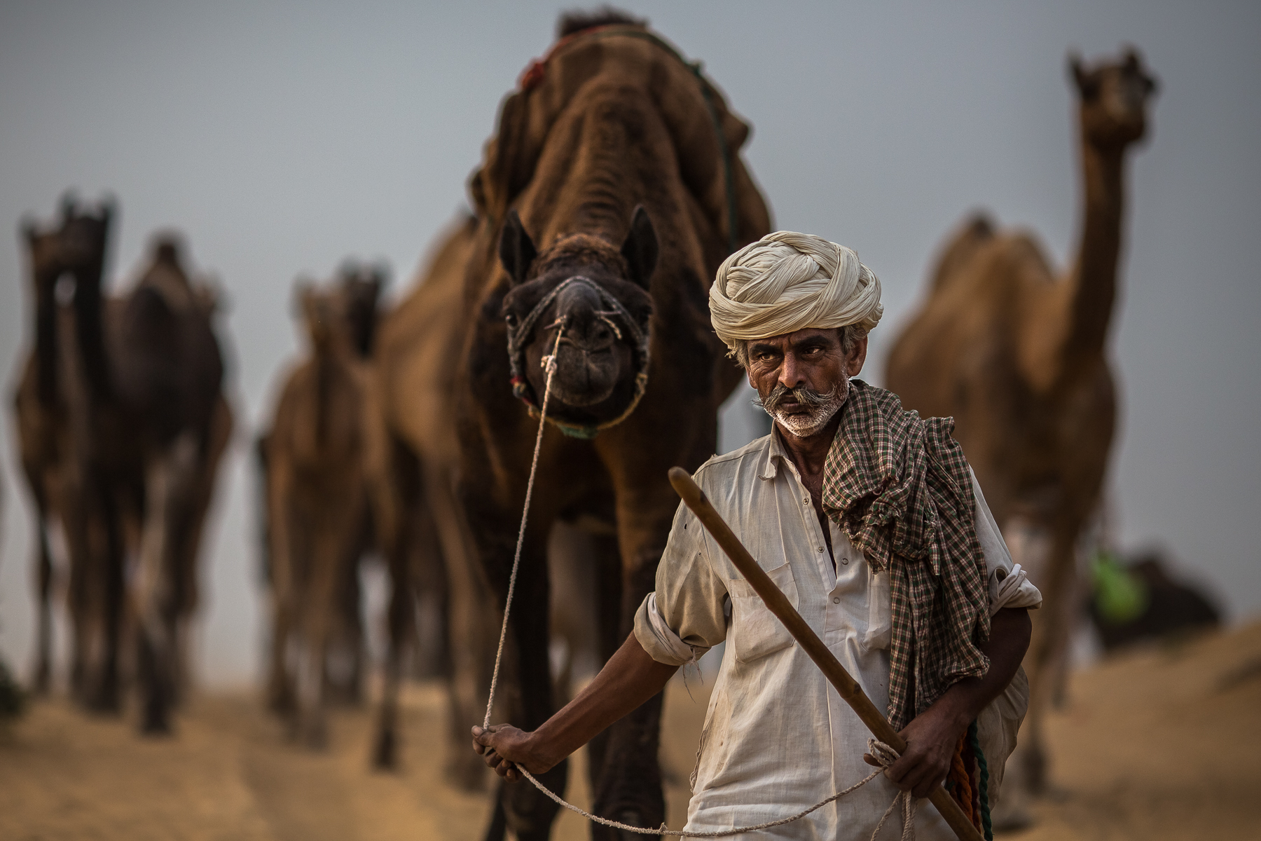 marwari camel trader 2...