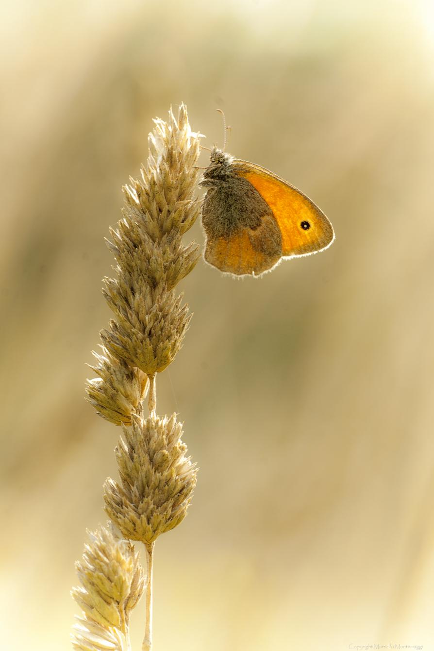 beige and orange...