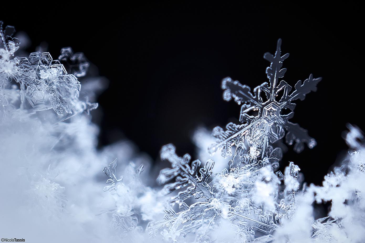 Prima Neve...