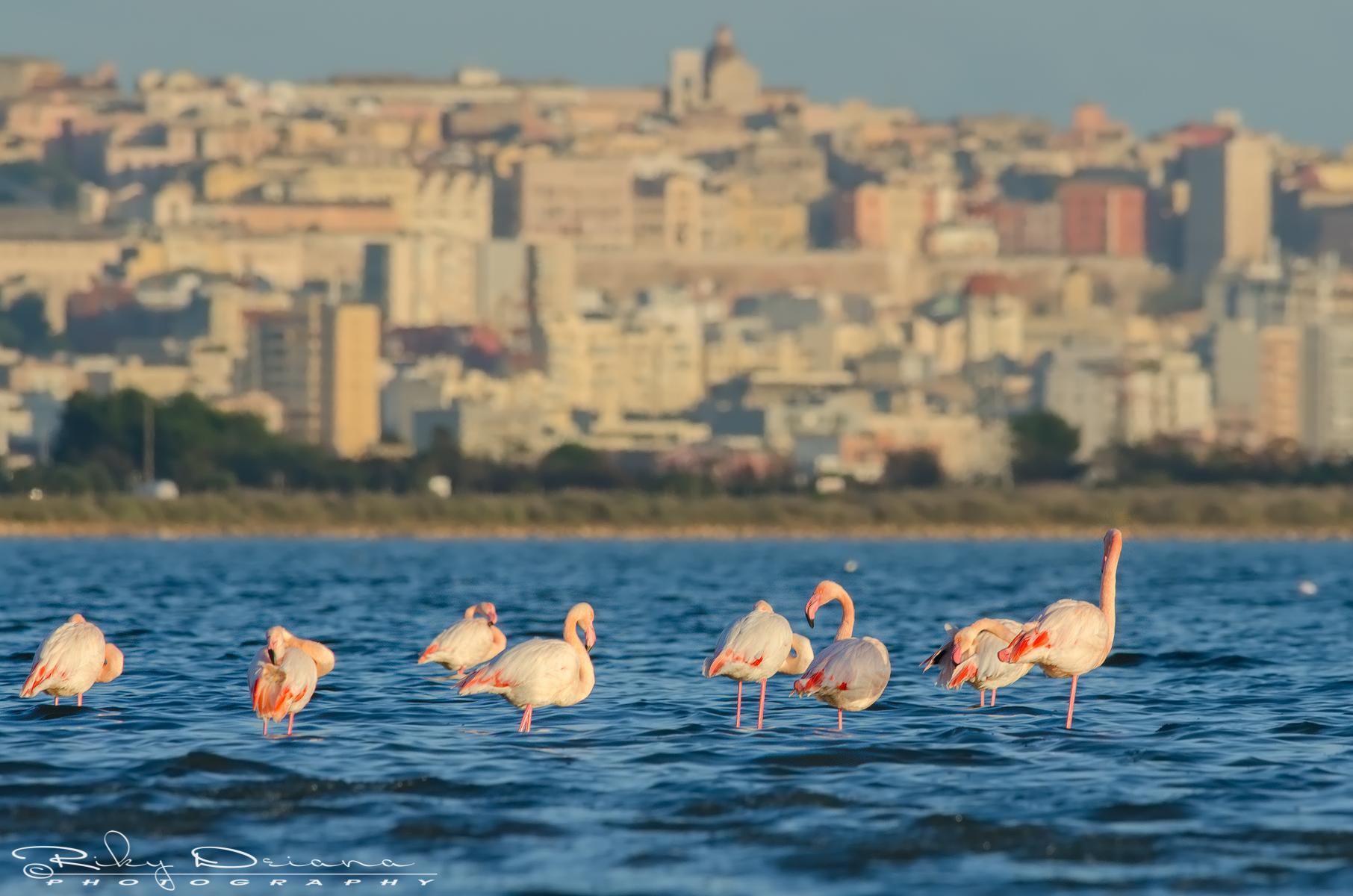 Cagliari west...