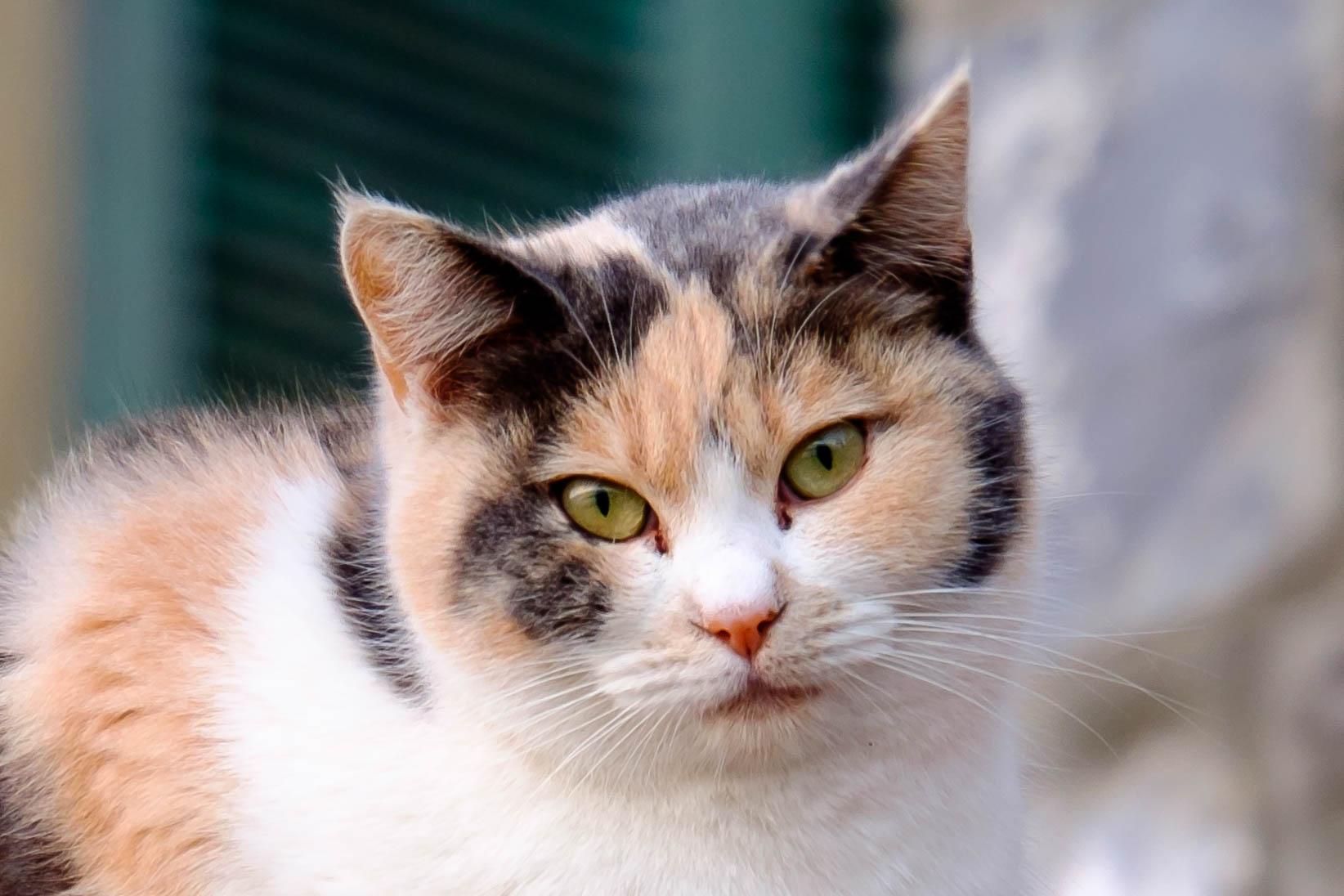 Ferocious feline ... citizen....