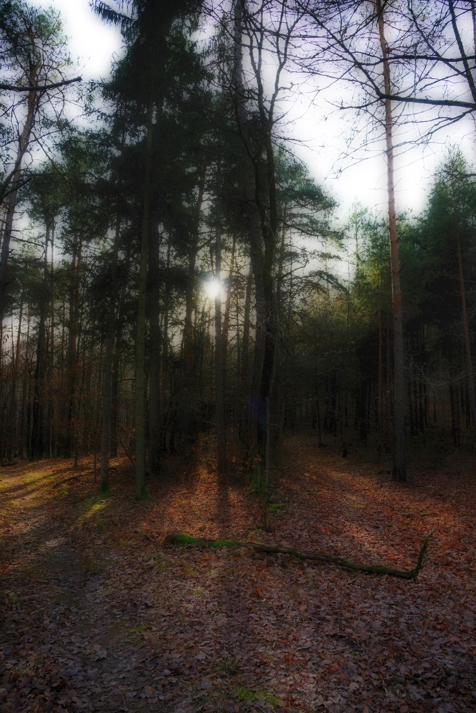 in bosco_2...