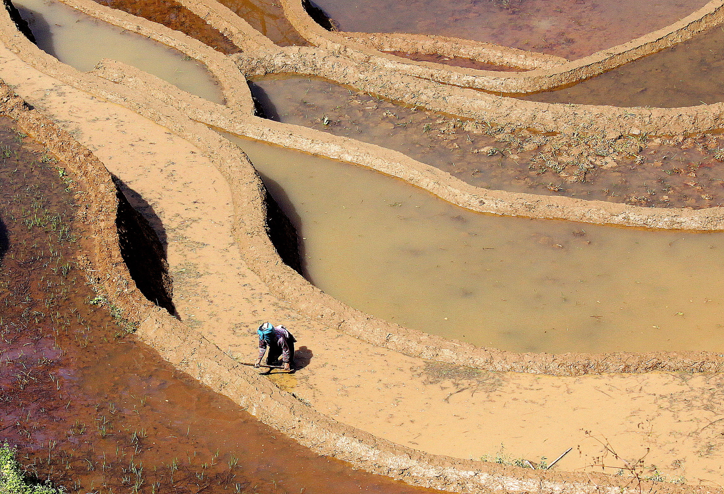 Yuanyang rice paddies - China...