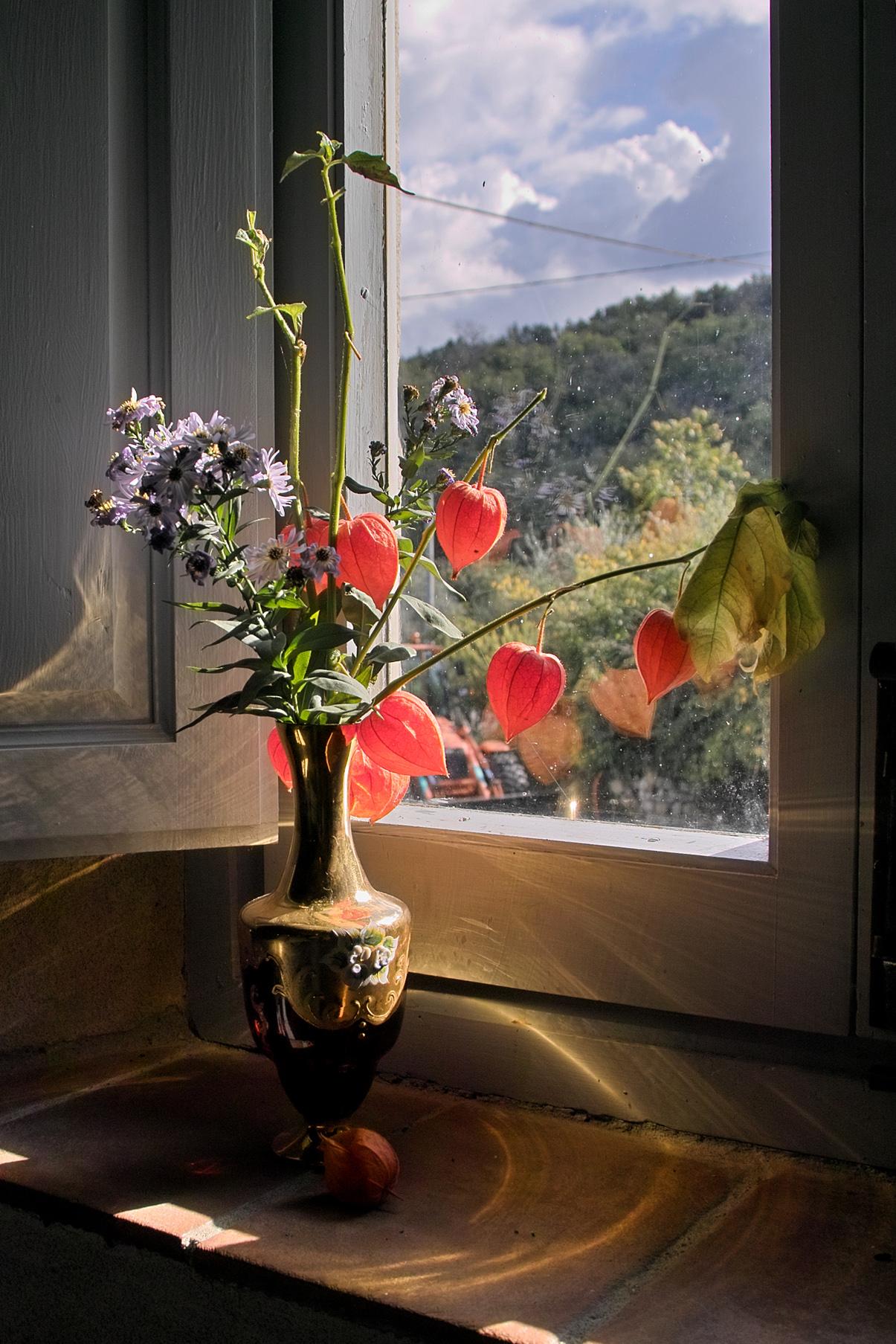 Fiori alla finestra juzaphoto - Fiori da finestra ...