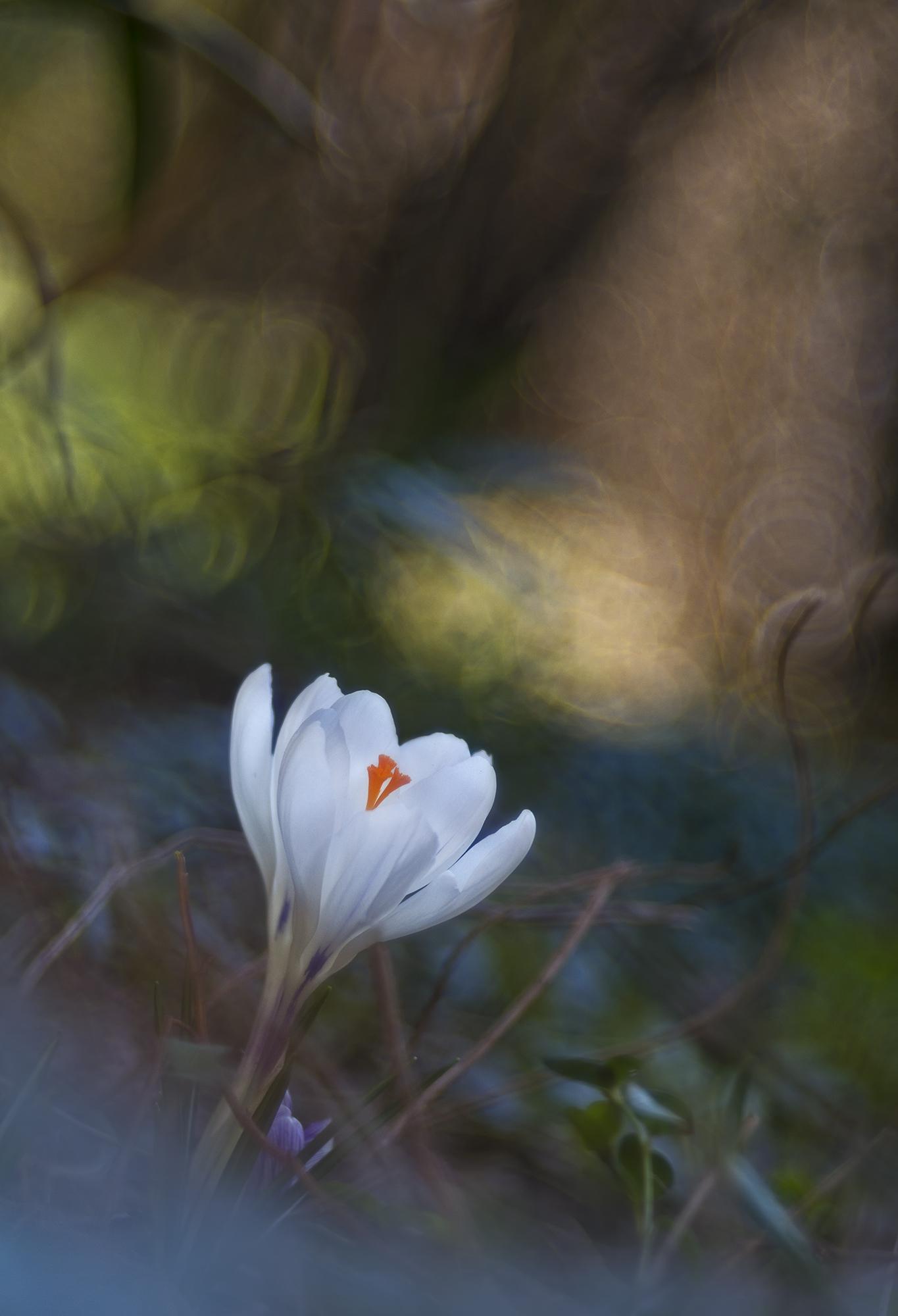 spring chaos...