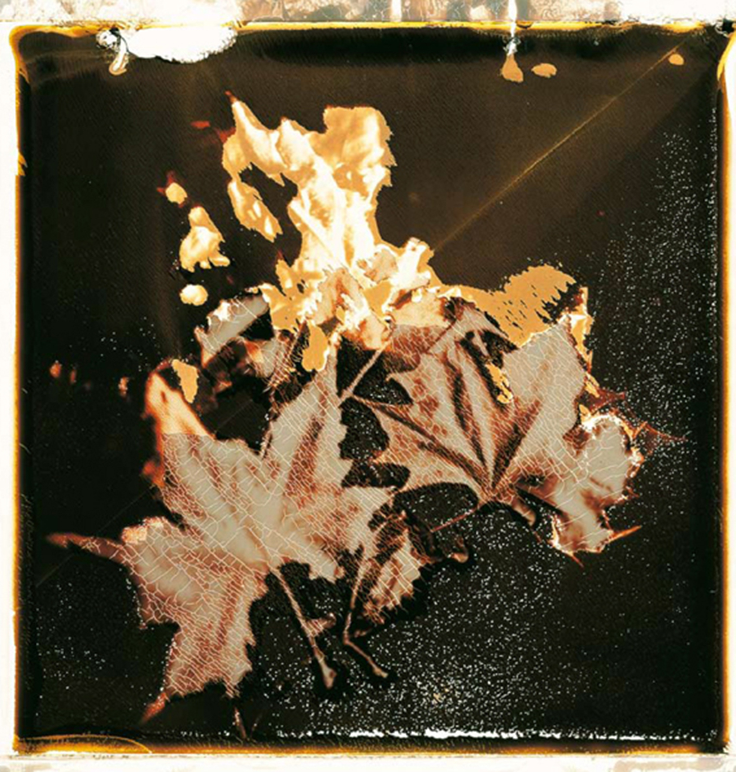 Gold leaves...