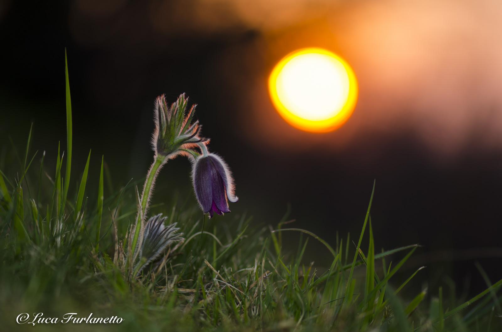 Sorge il sole sulla primavera...