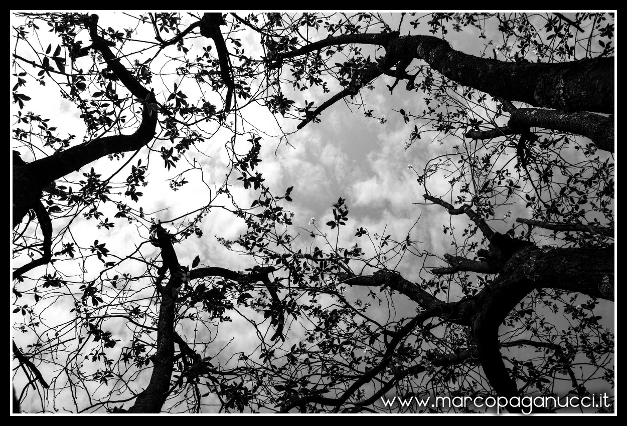 the sky through the leaves...