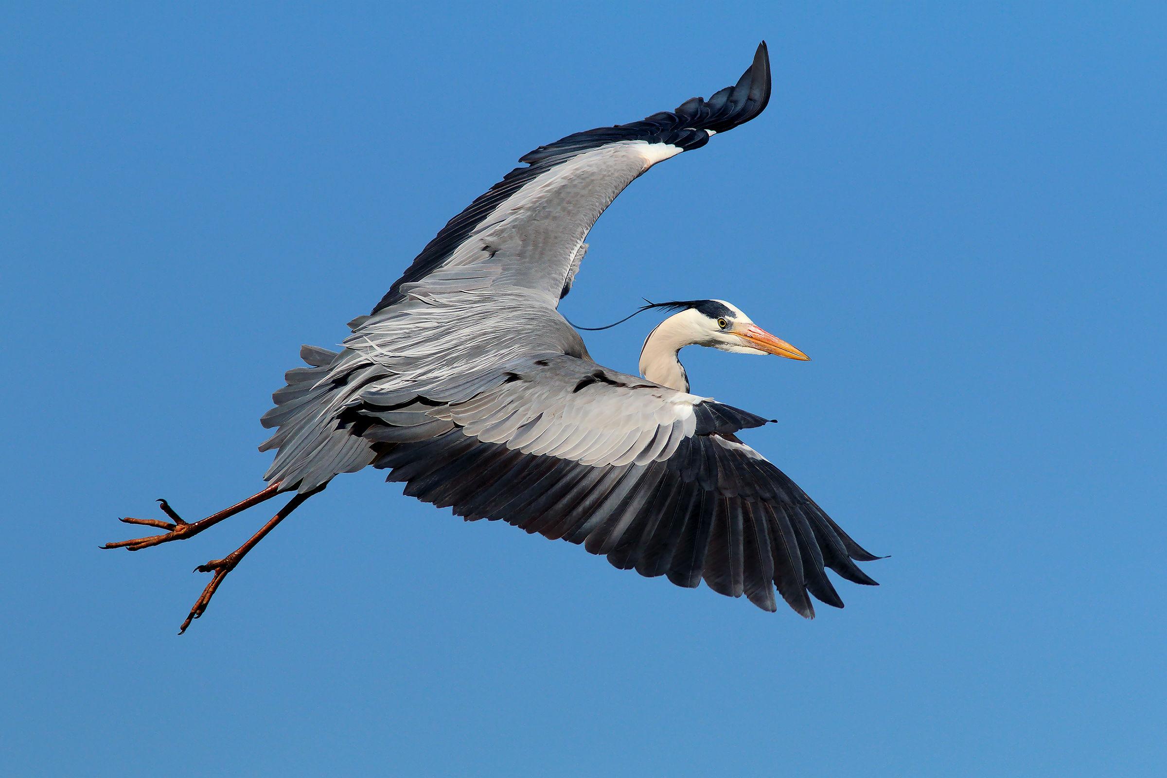 Wings in the wind...