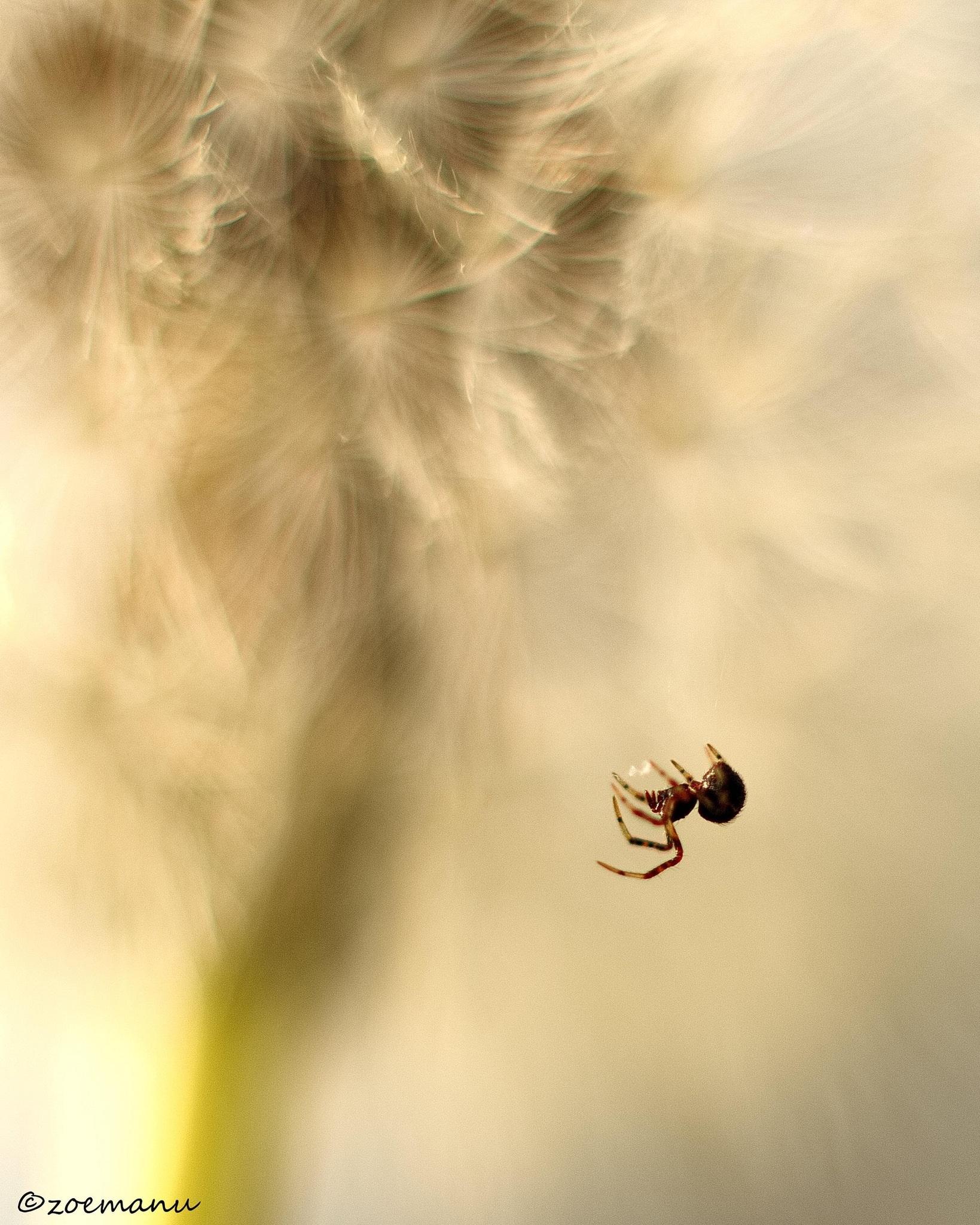 Spider on head...