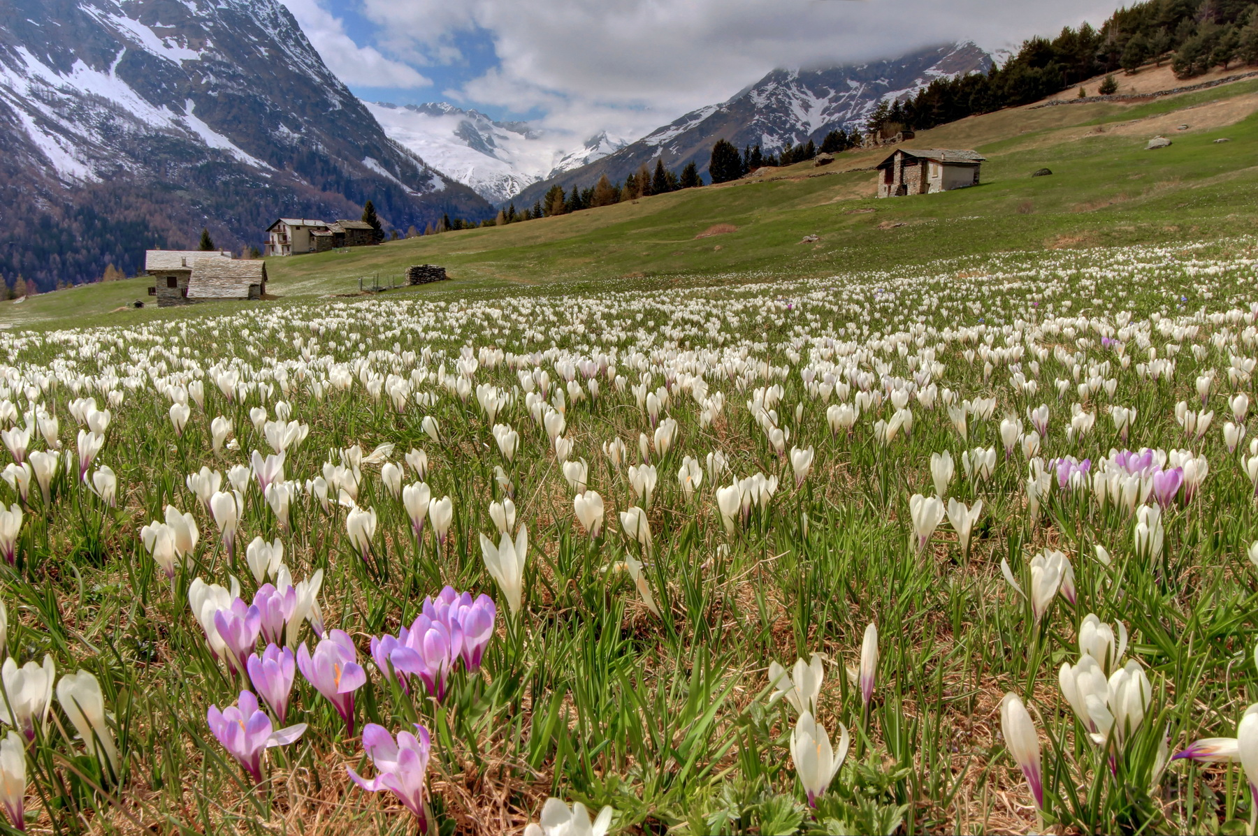Spring in Valmalenco...