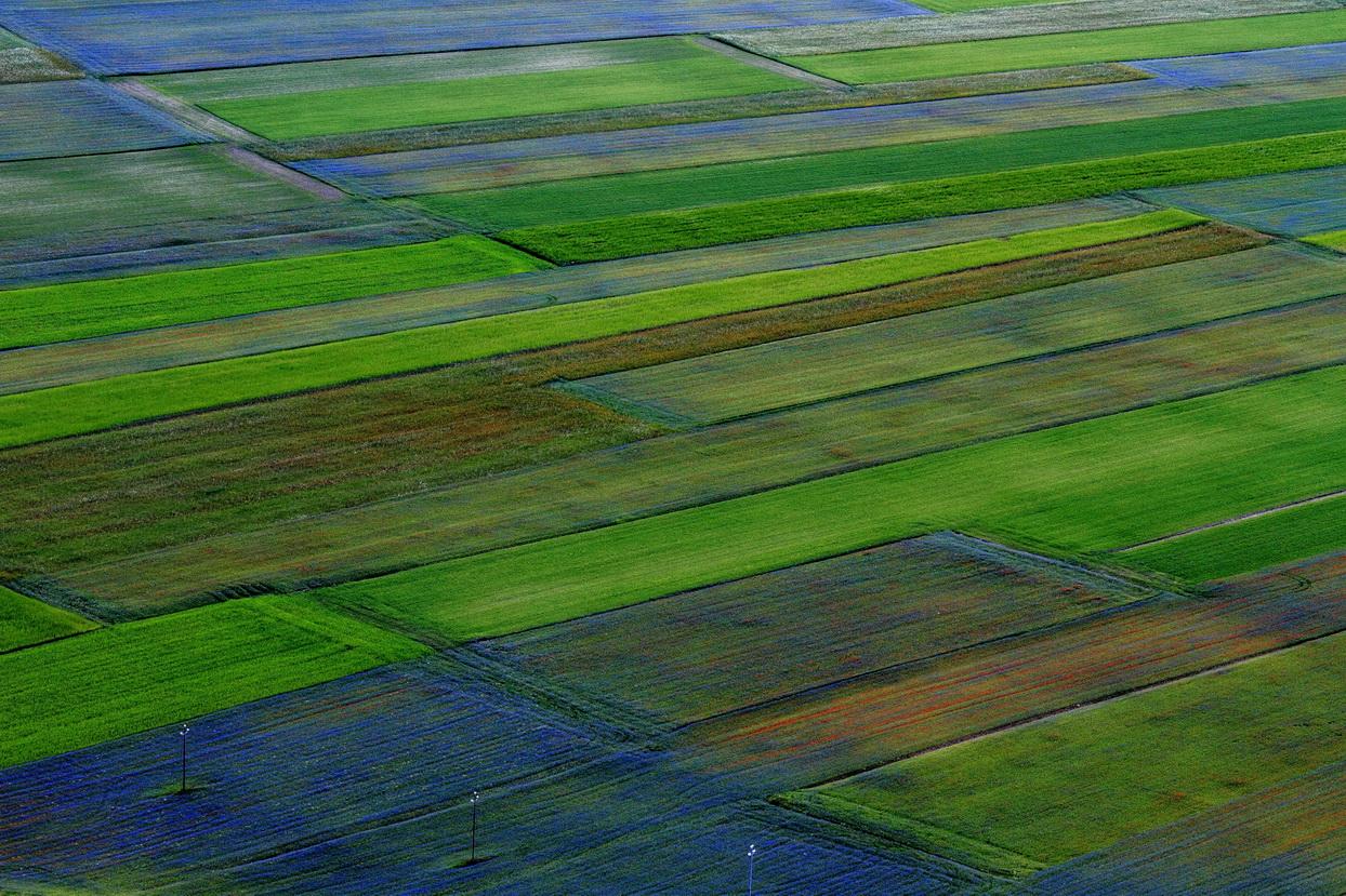 United colors of Castelluccio...