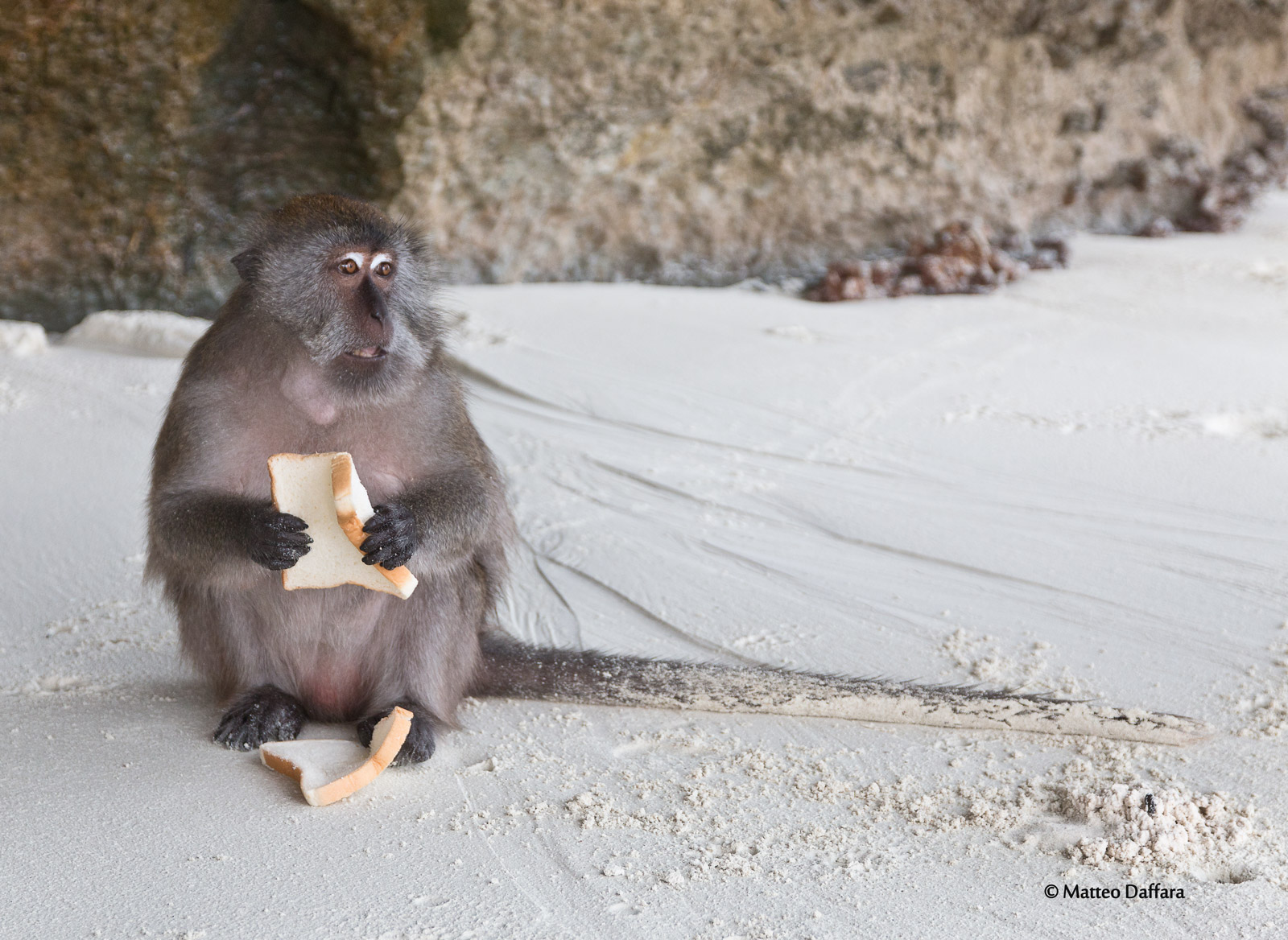 Scimmia a Monkey beach...