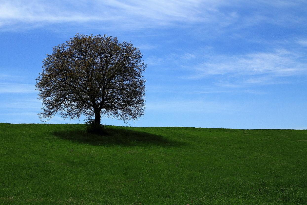 the lone Pereto...