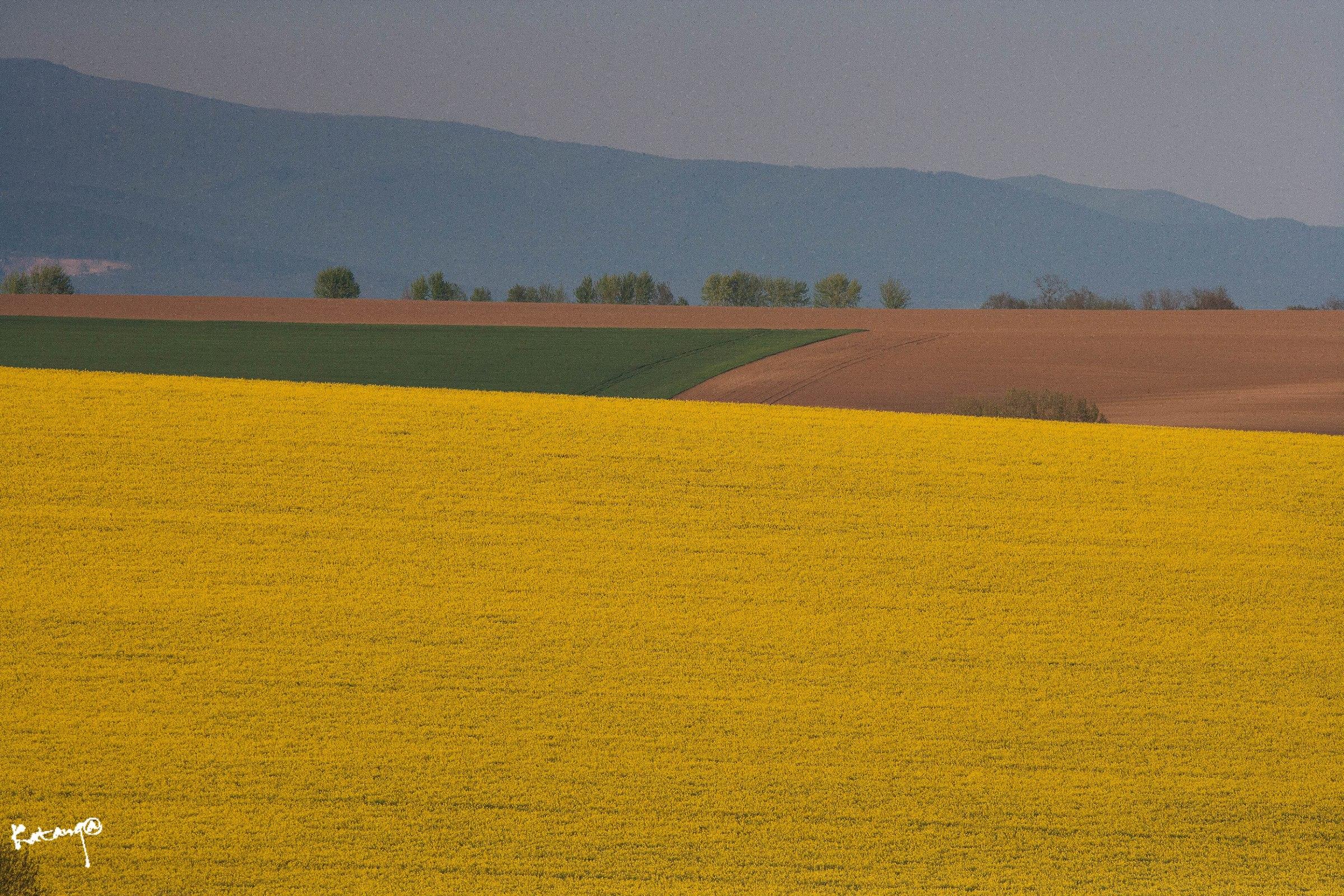 Rape fields...