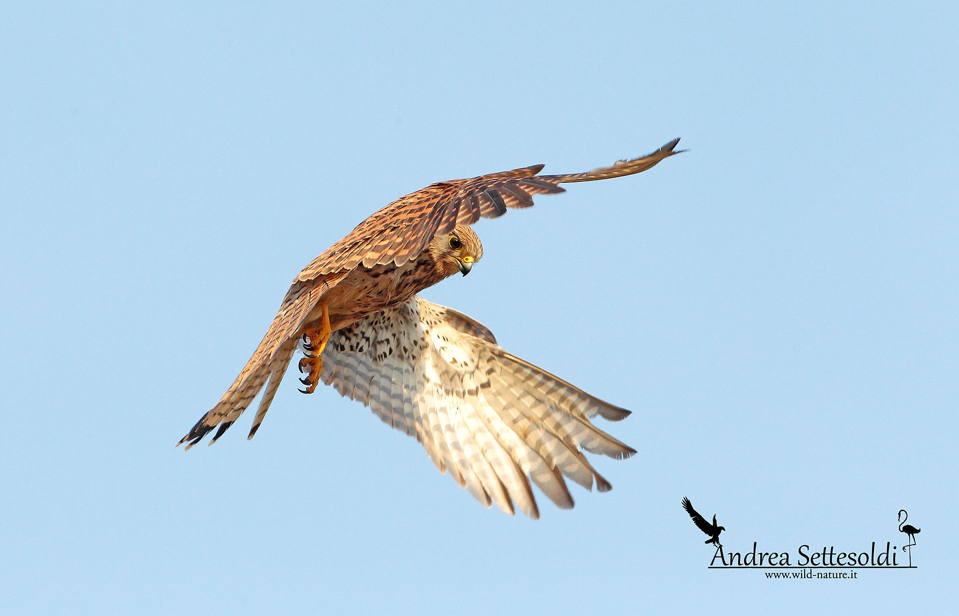 Kestrel with a different perspective...