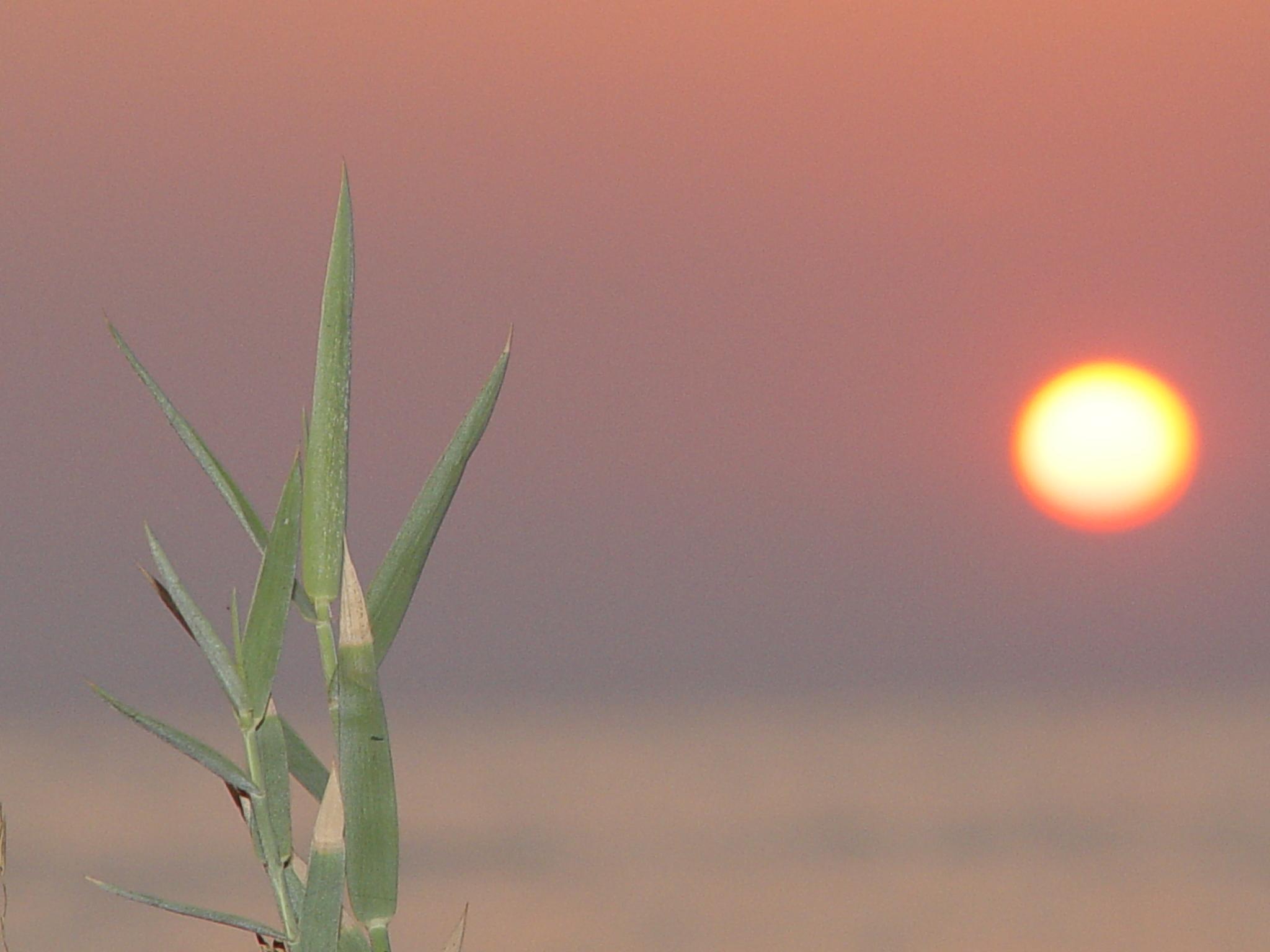 Sunset 1...