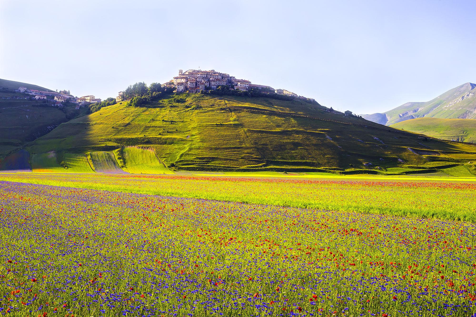 Castelluccio bloom 2015...