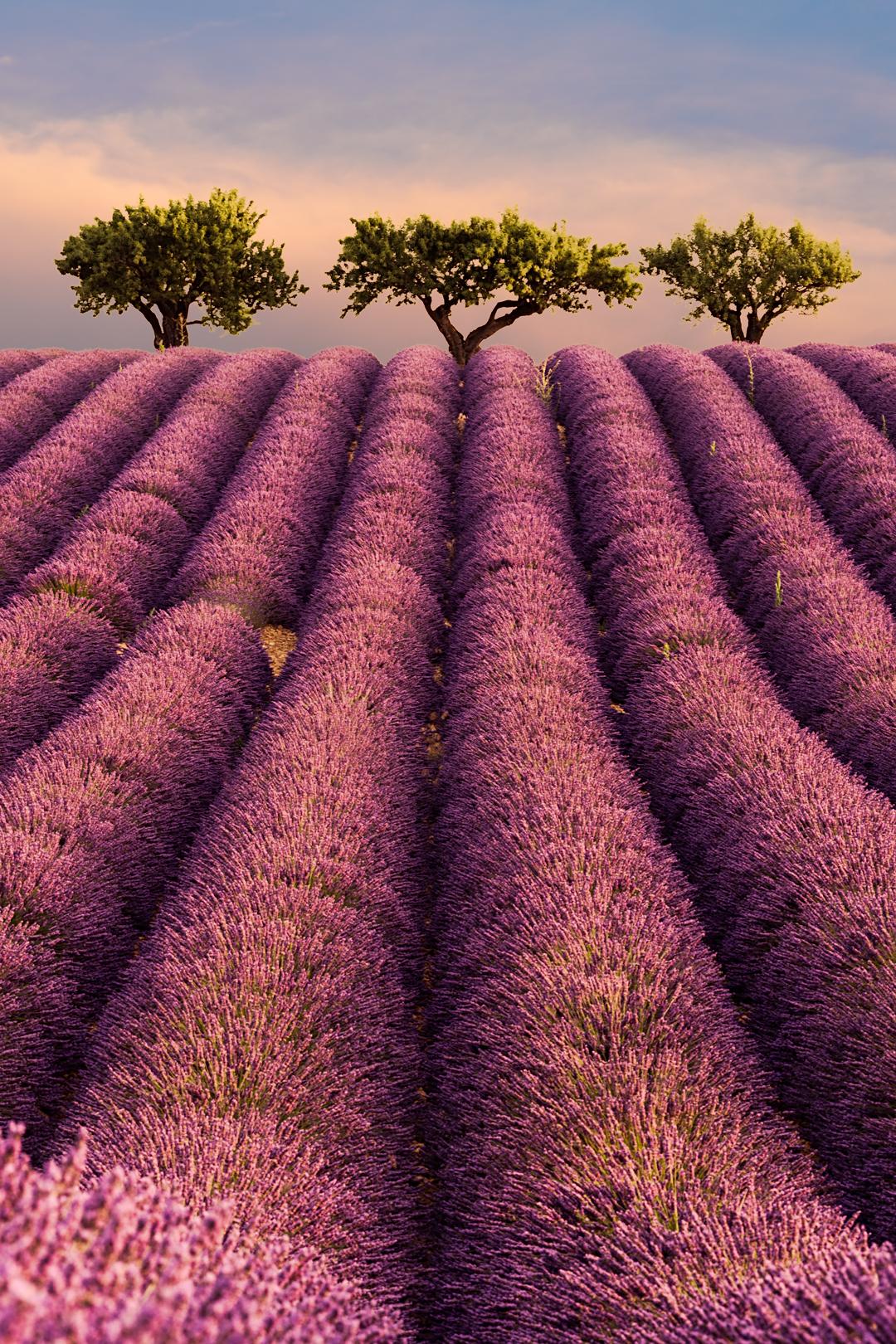 Violet Paradise...
