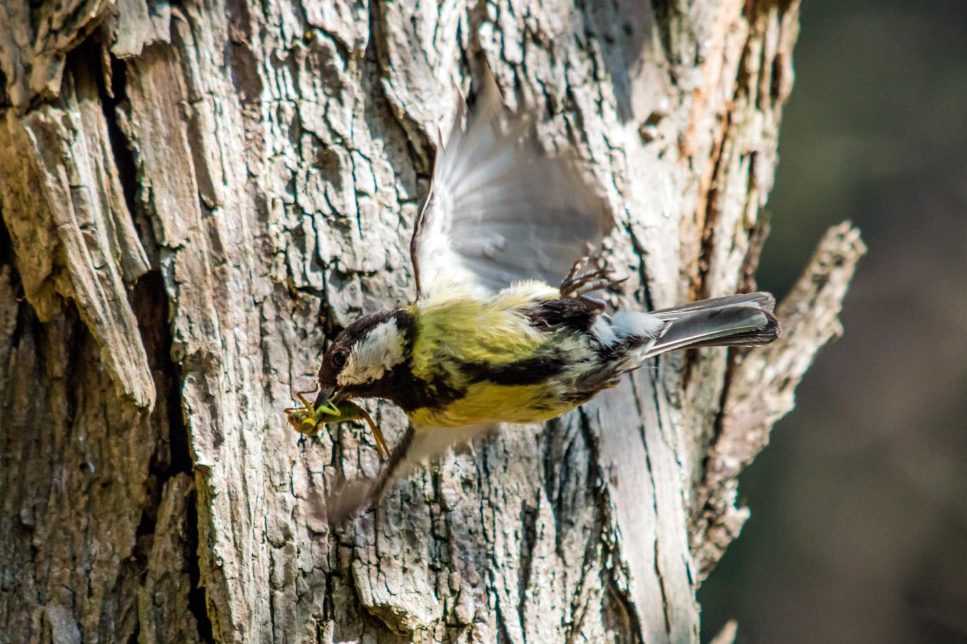 Ritorno al nido 3...