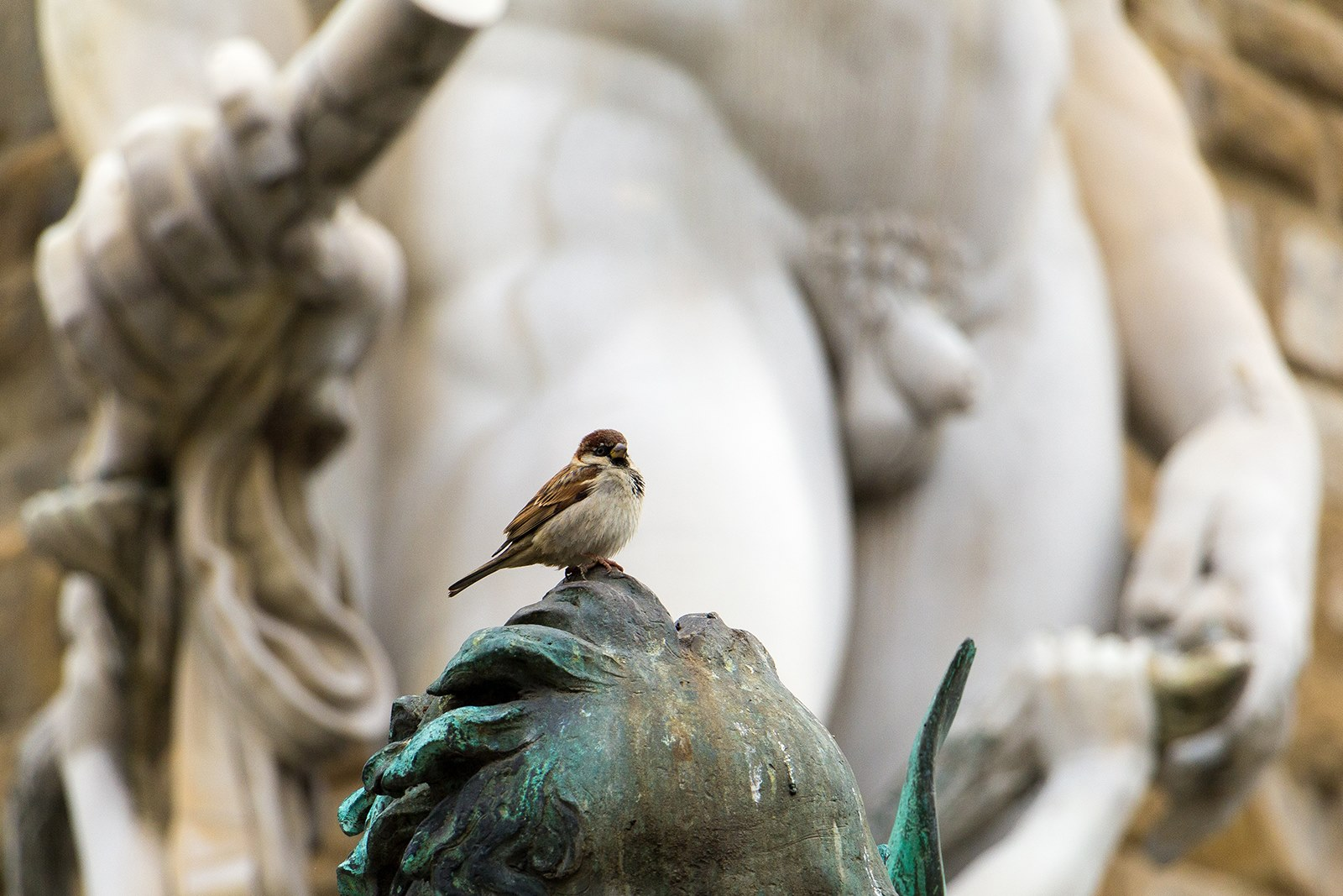 The most famous birds of Florence...