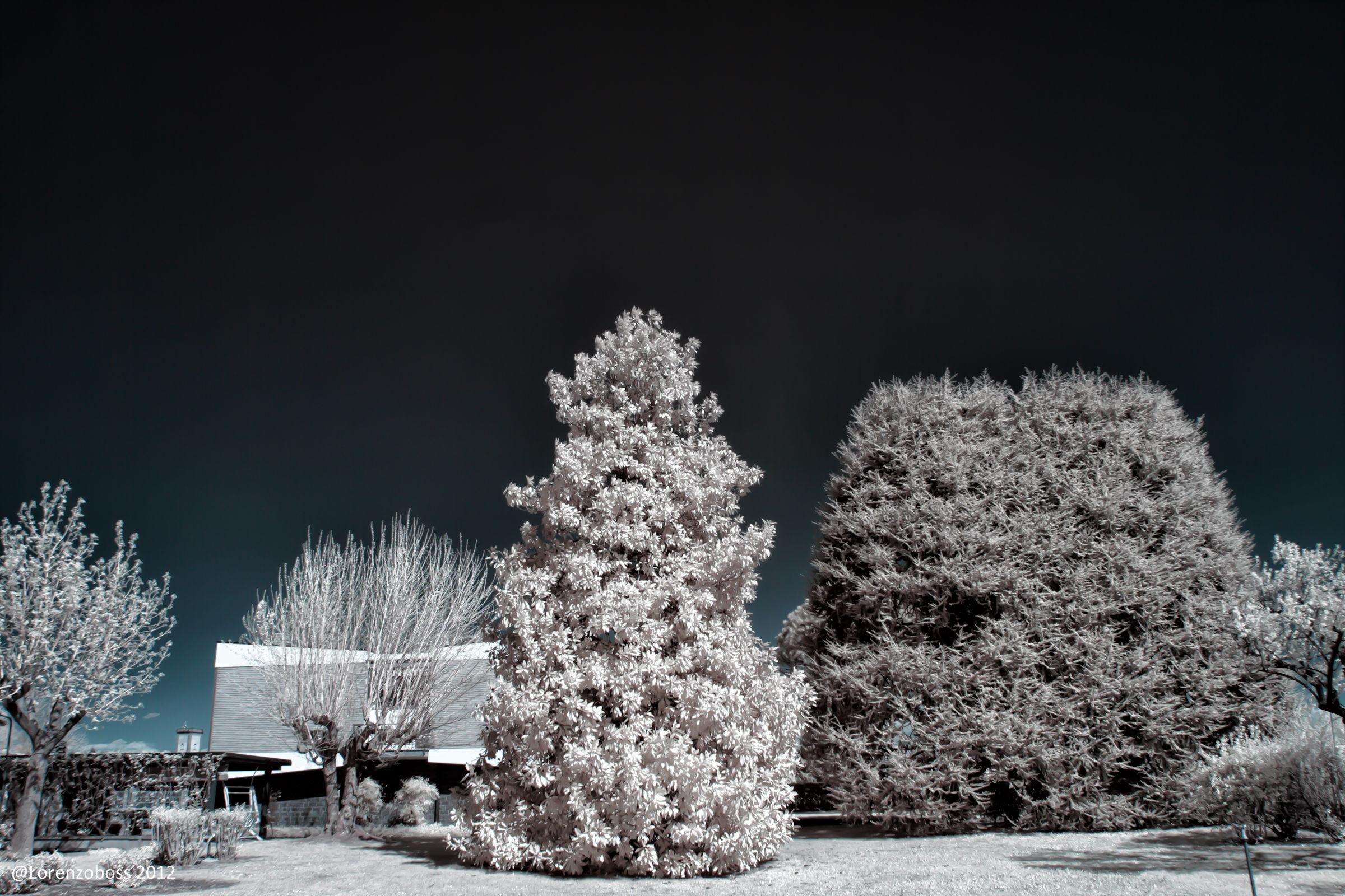 My home garden Infrared...