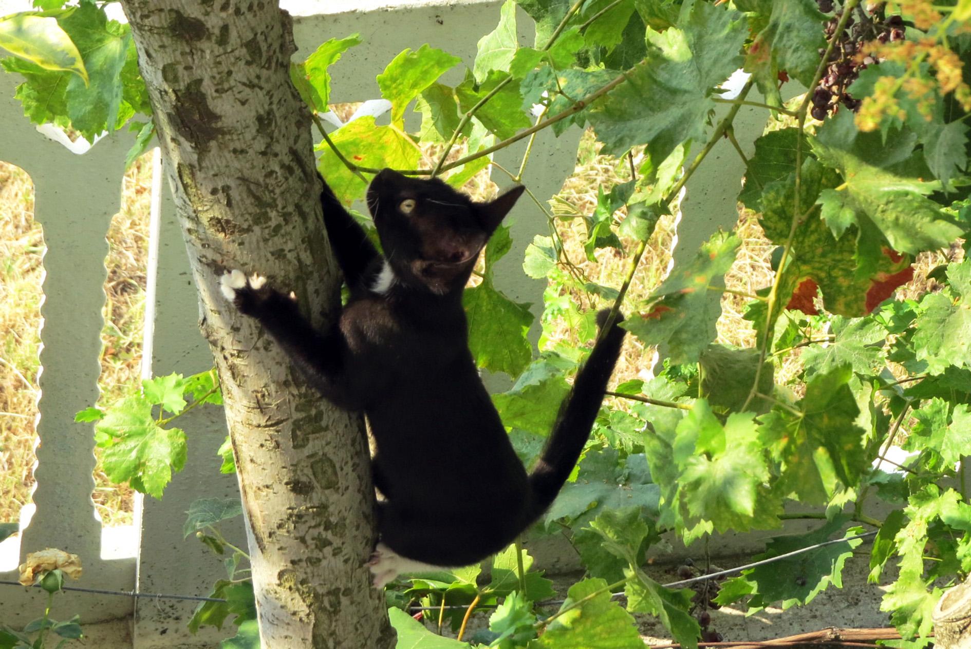Cat Climber...