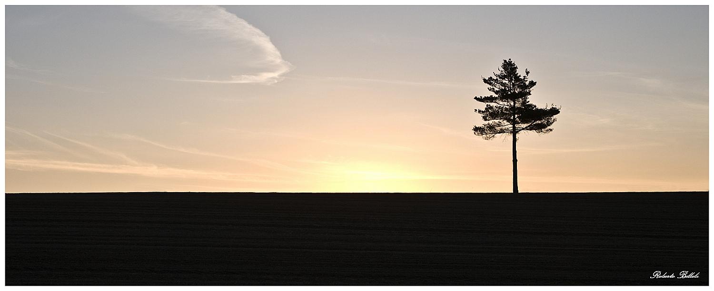 Piedmont Zen...