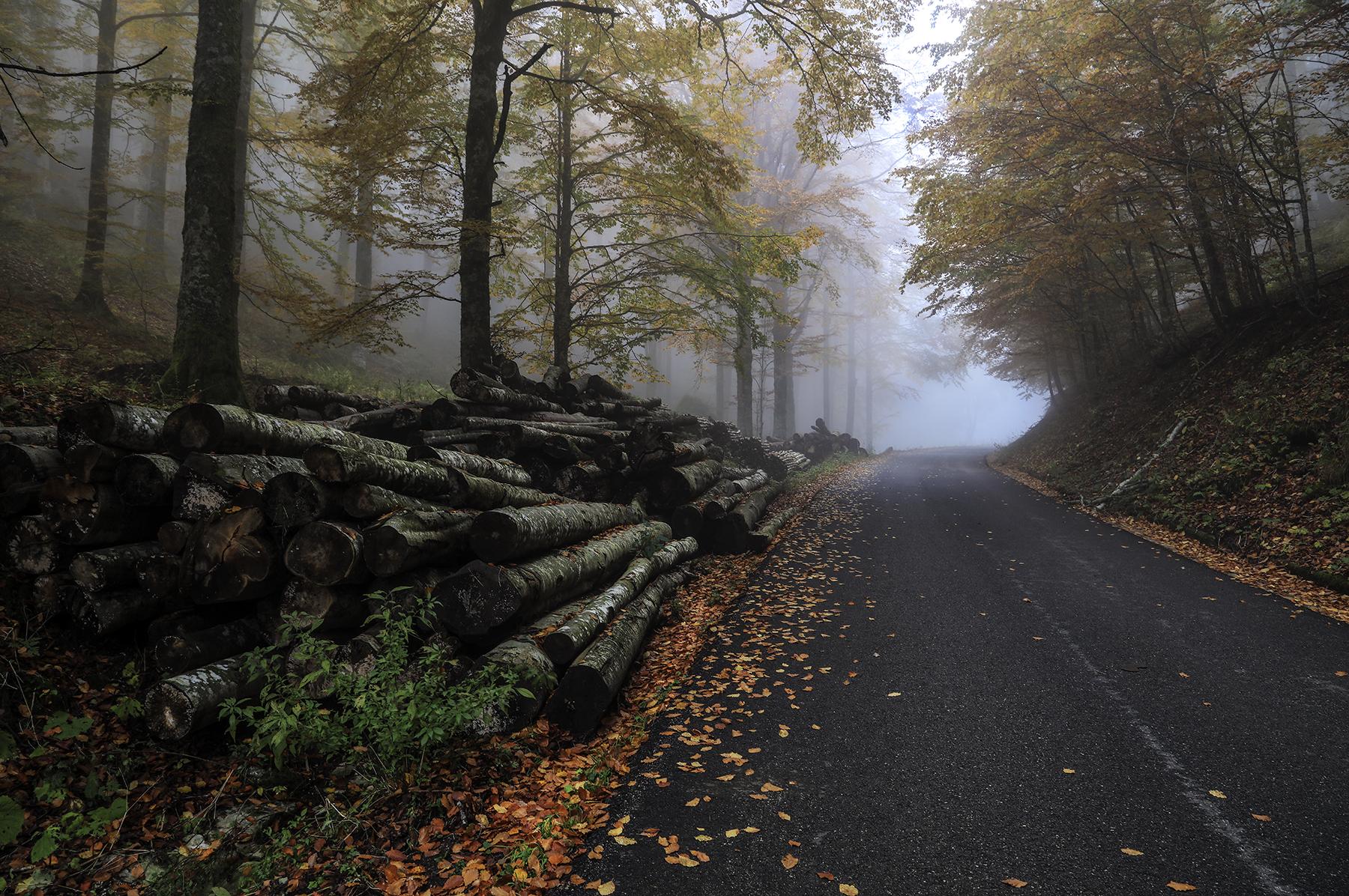 Strada con tronchi...