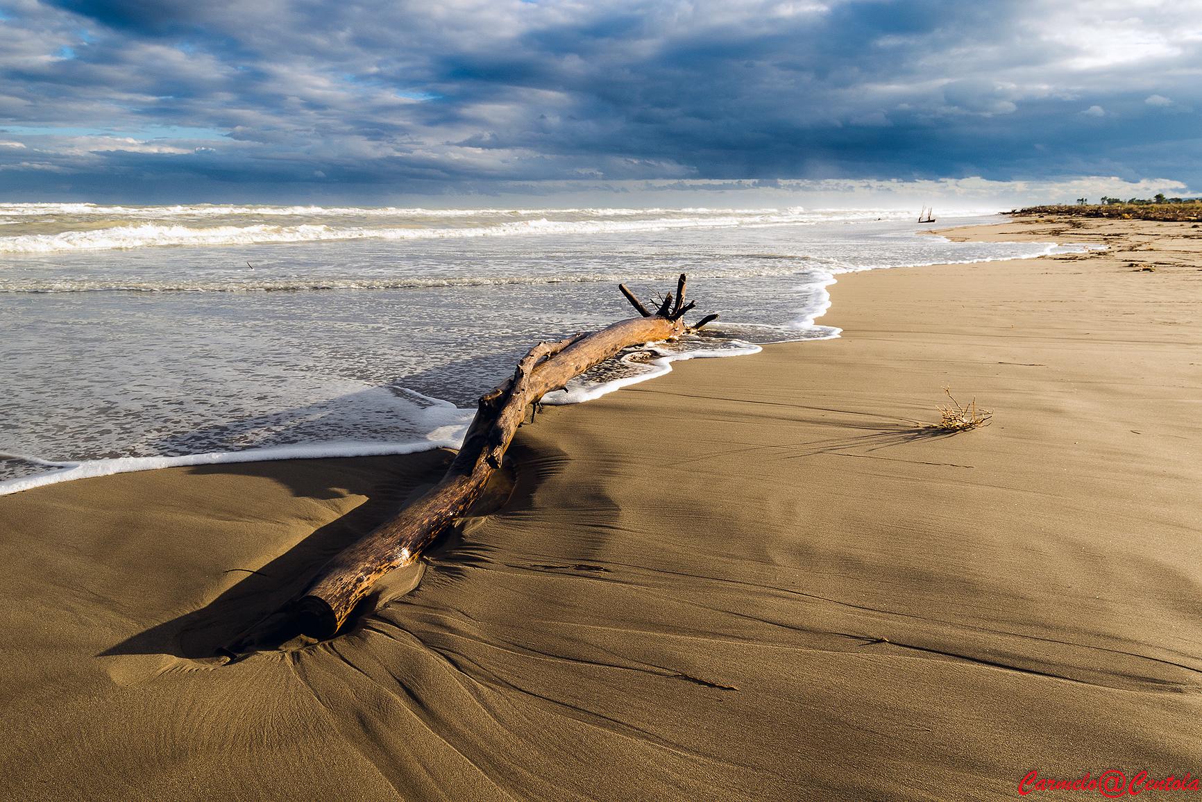 legno di mare...