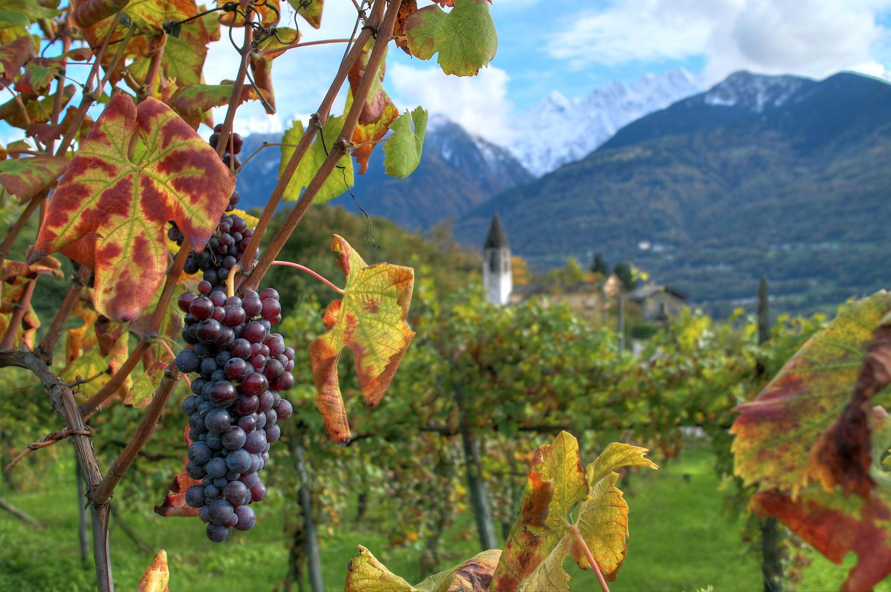 Autumn in Valtellina...