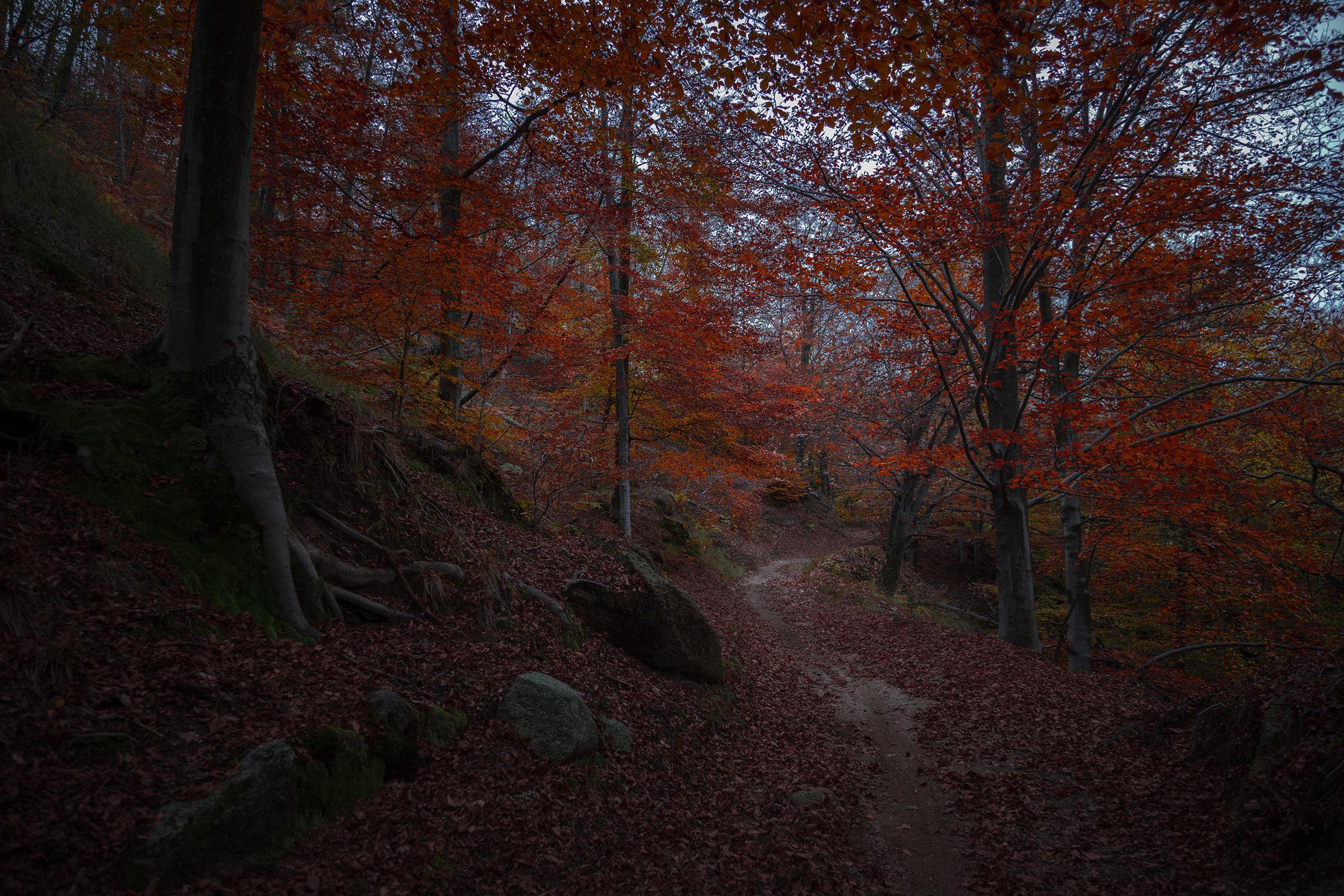 Autumn path...