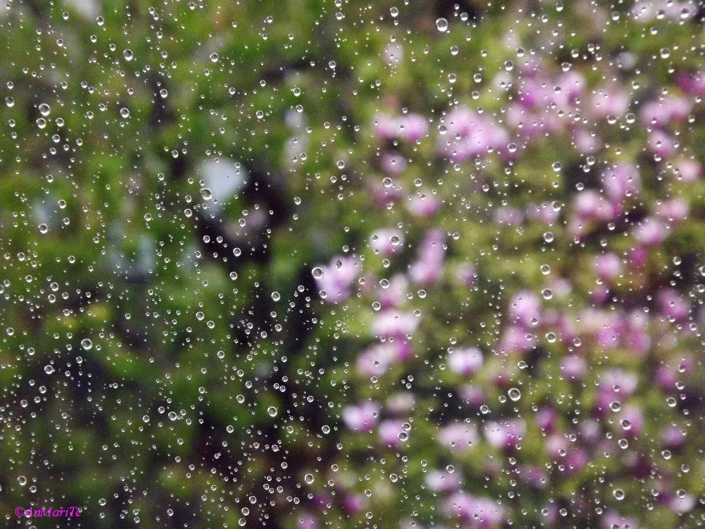 Pioggia fra il vetro e il mondo...