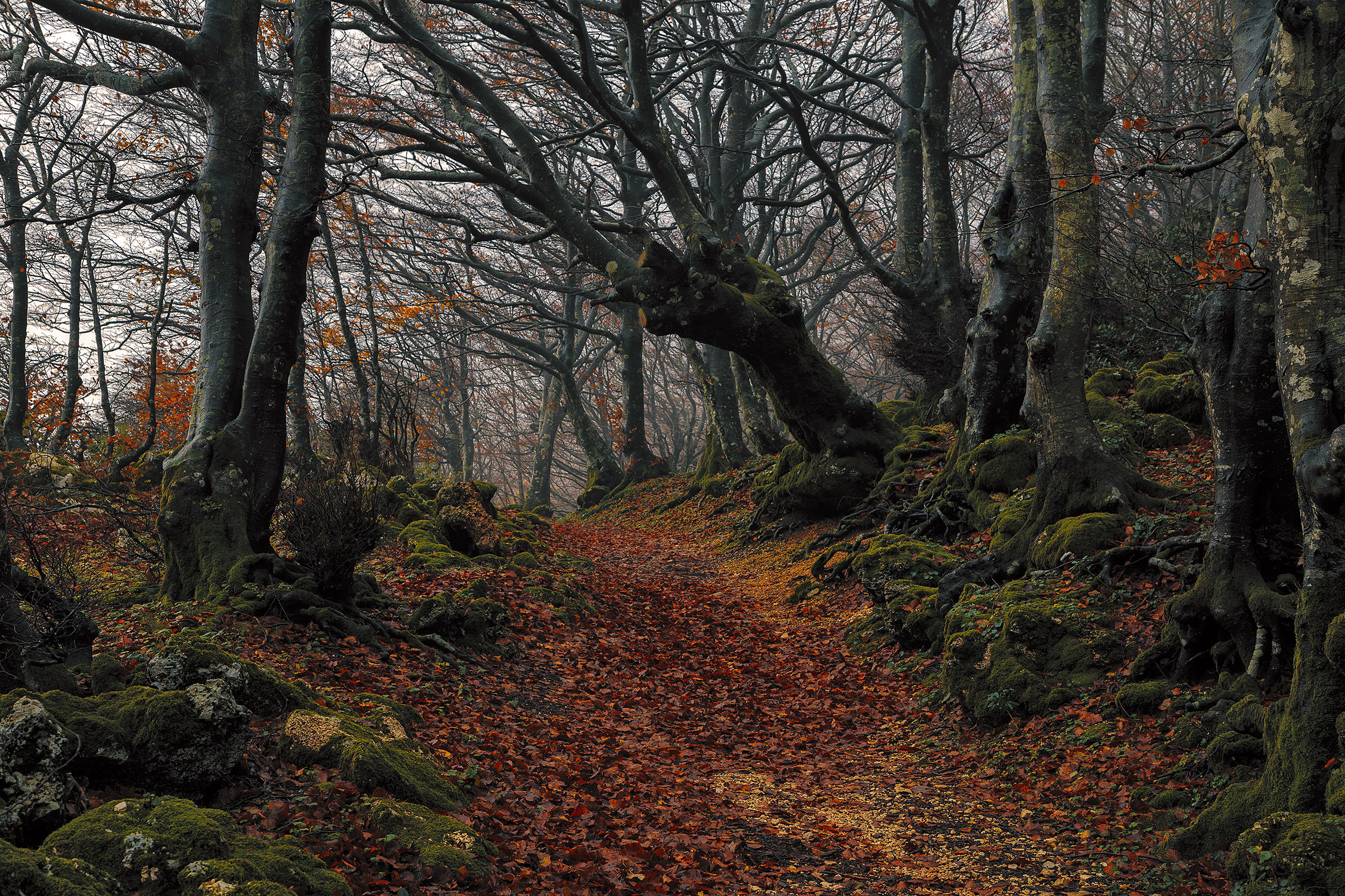 In the forest with mist ... a year later!...
