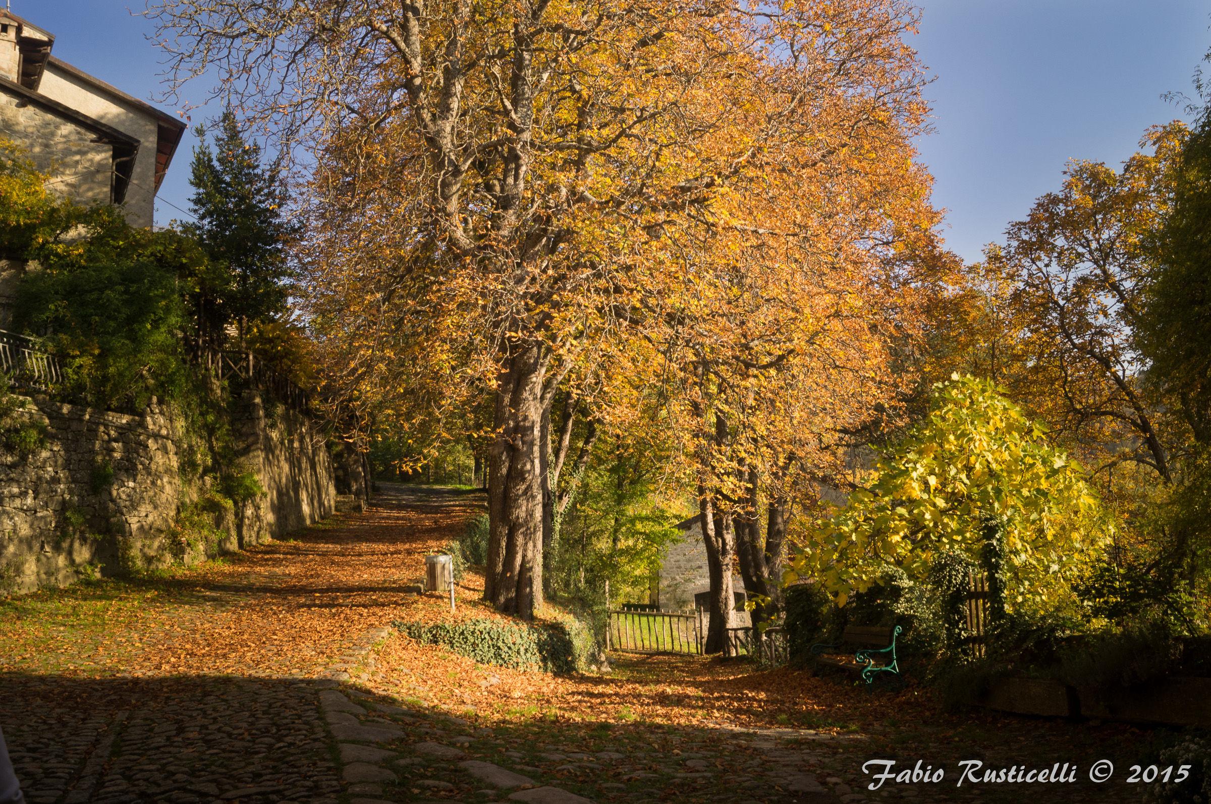 Autumn in Borgo La Scola...