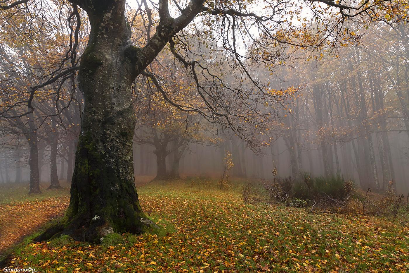 Glimpse autumn...