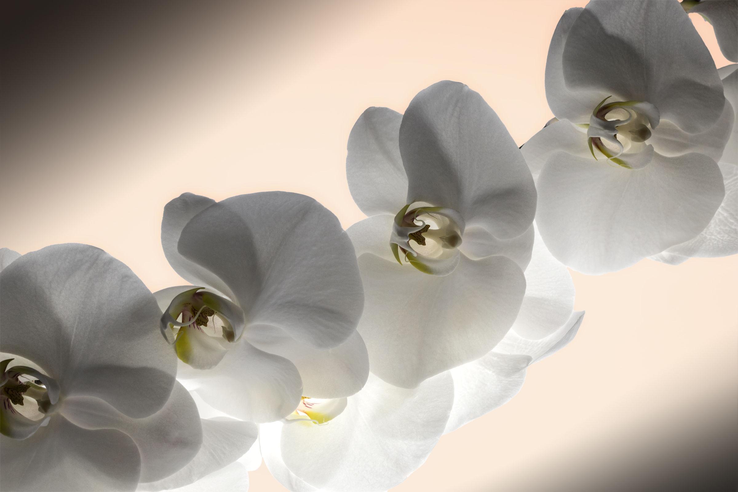 Floral nuances...