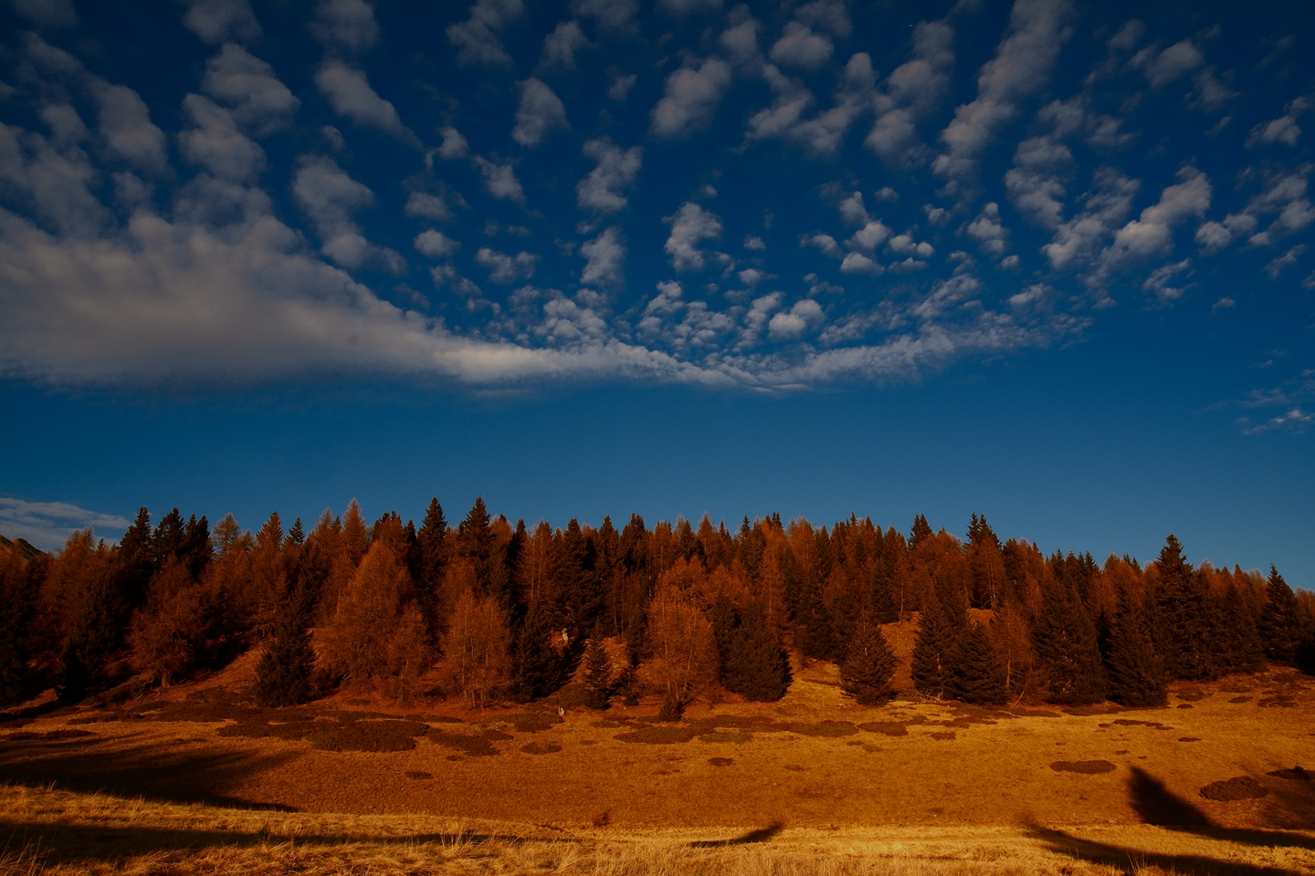 Pastures, forests and sky....