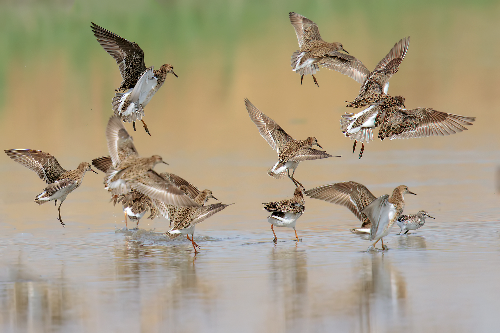 Group of fighters with sandpiper...