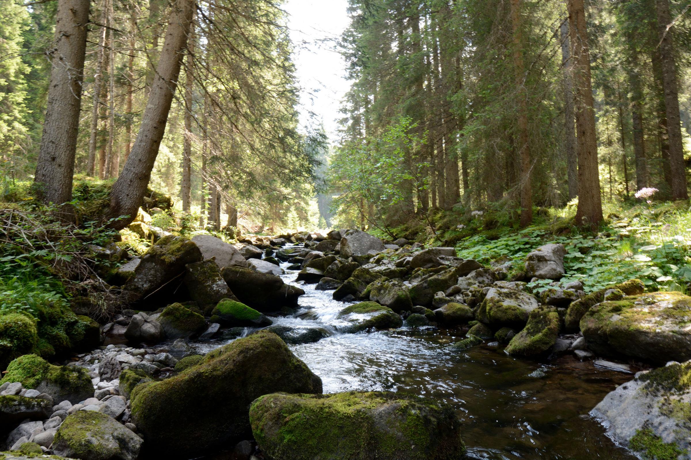 torrente nel bosco...